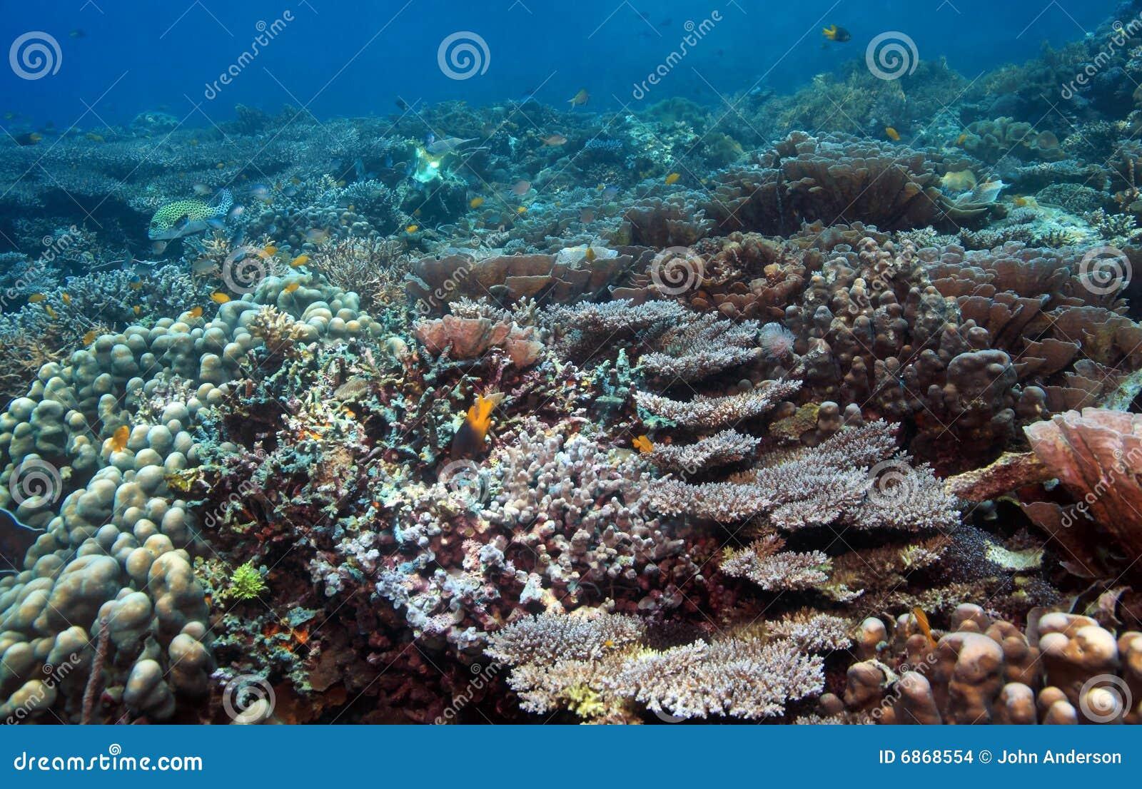 риф индонезийца коралла