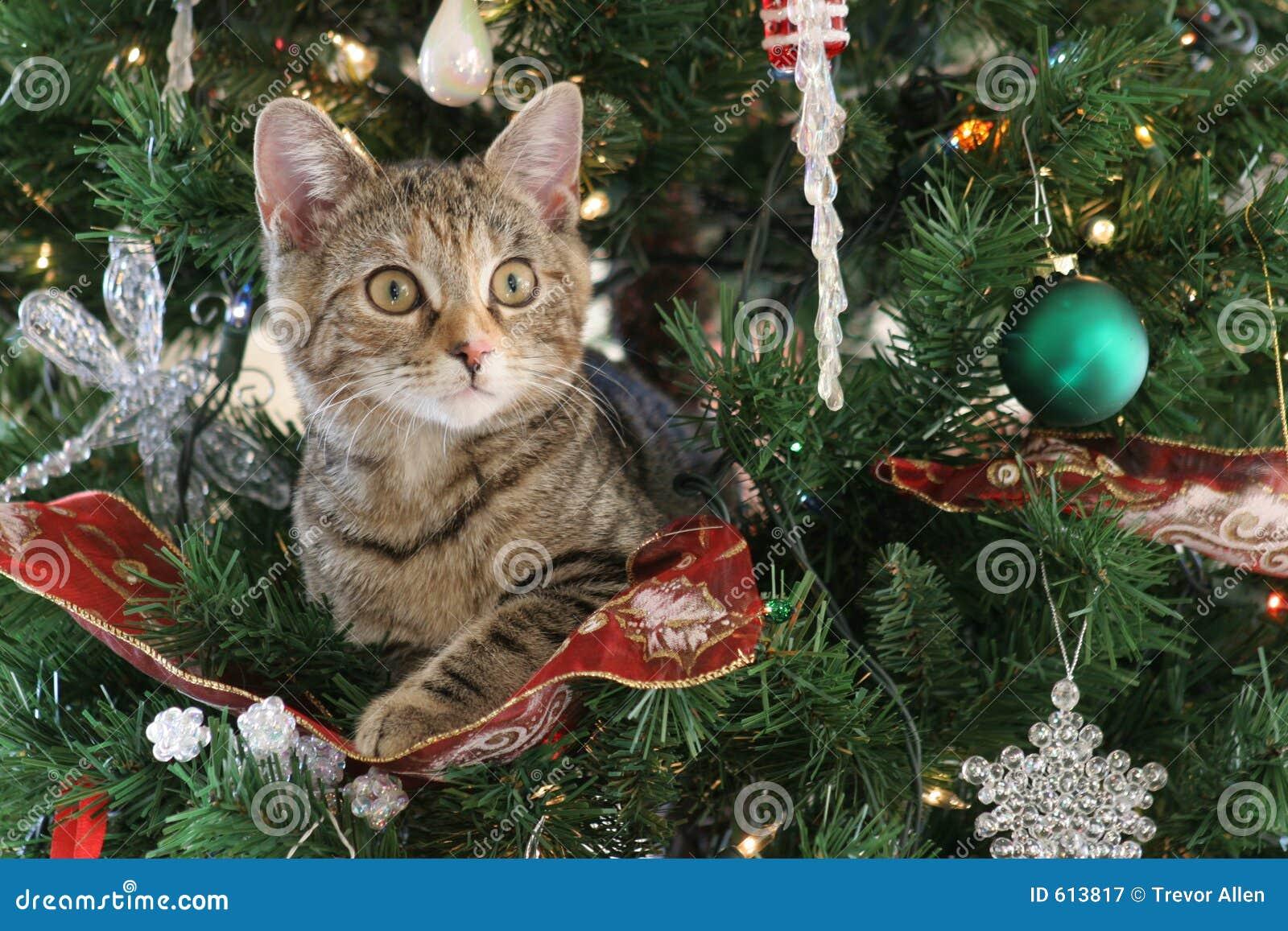 Кот возле елки фото