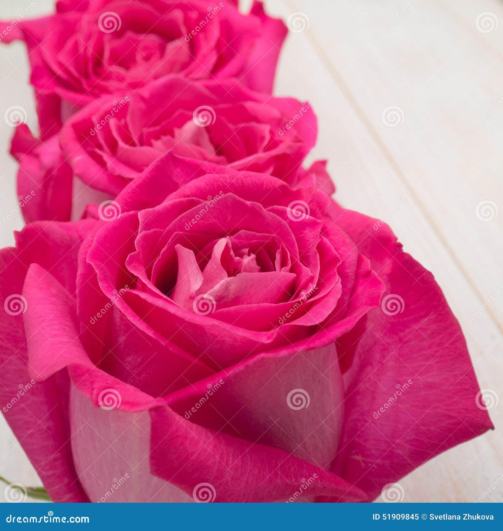 Розовые гибридные розы чая