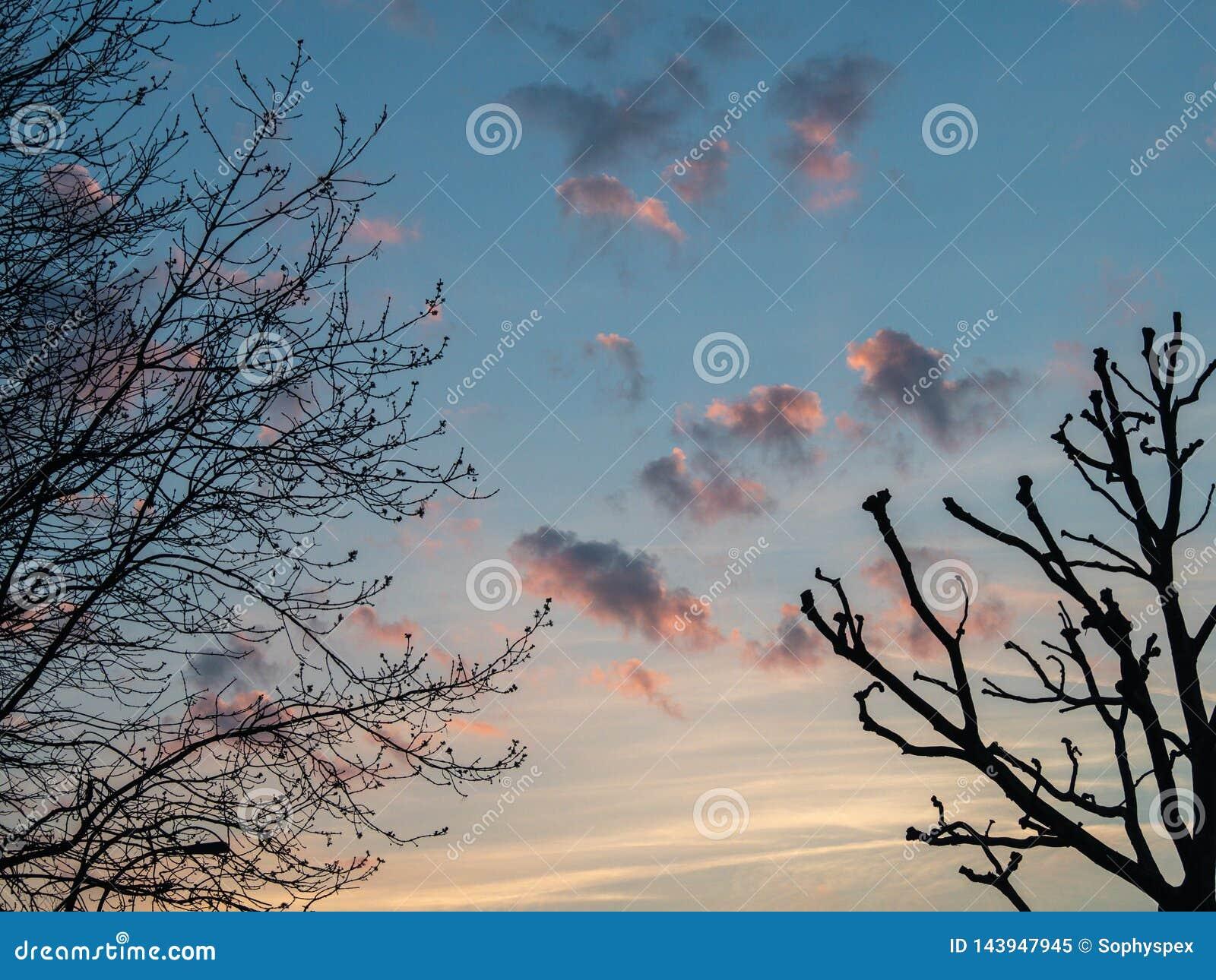 Розовые окрашиванные облака на заходе солнца с silhouetted деревьями