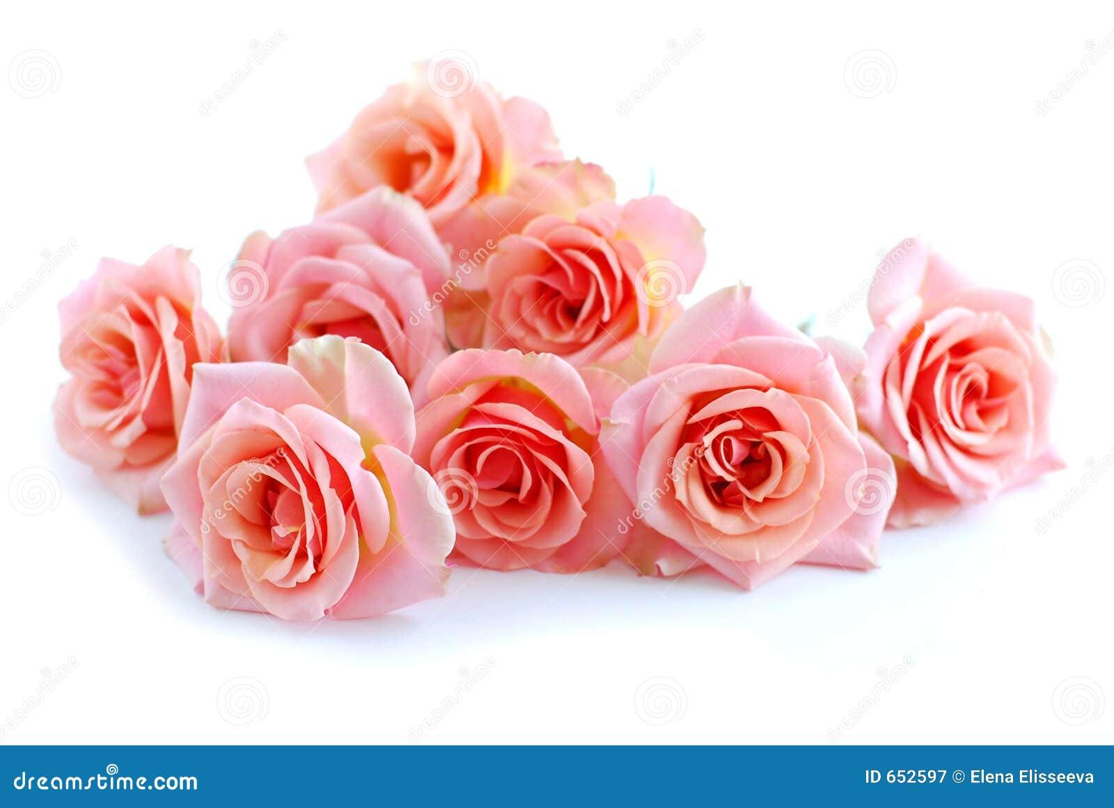 розовые розы белые