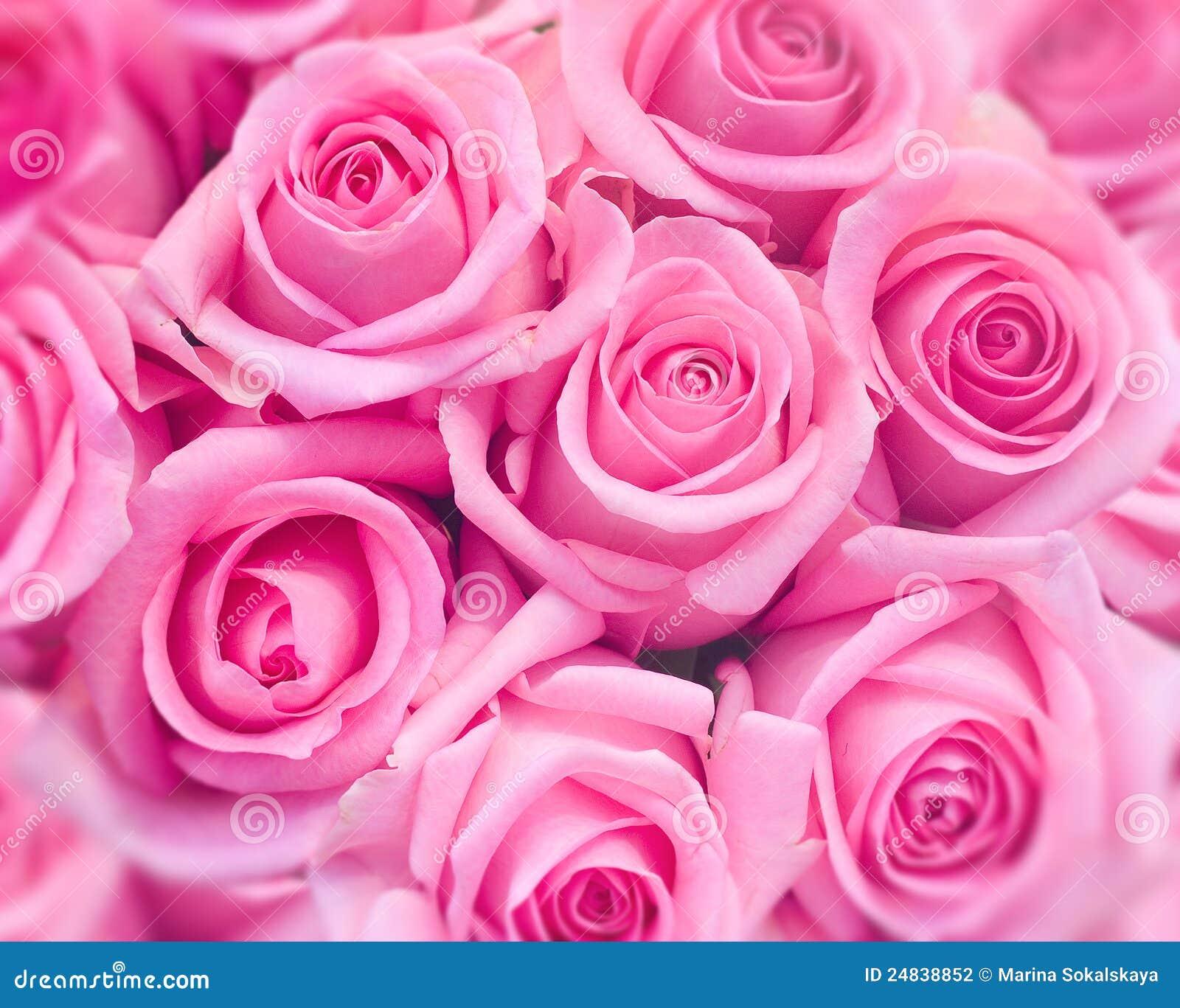 Картинка розы розовые