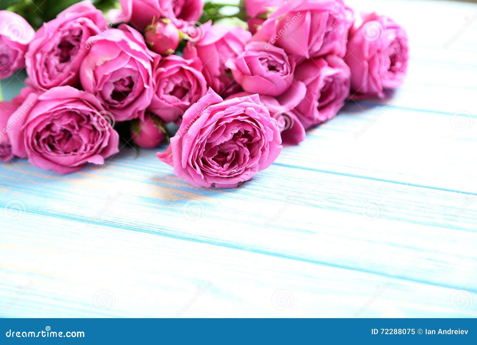 Download розовые розы стоковое изображение. изображение насчитывающей макрос - 72288075