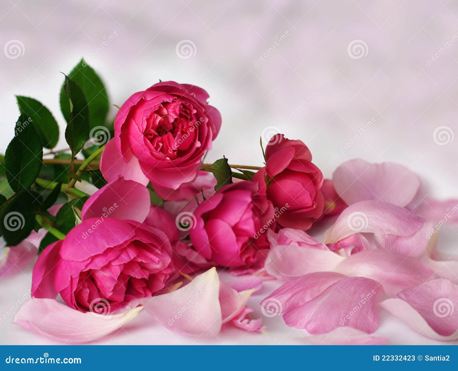 розовые романтичные розы
