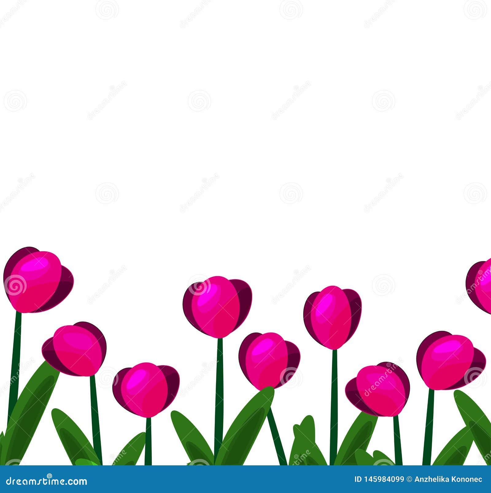 Розовые тюльпаны background-01