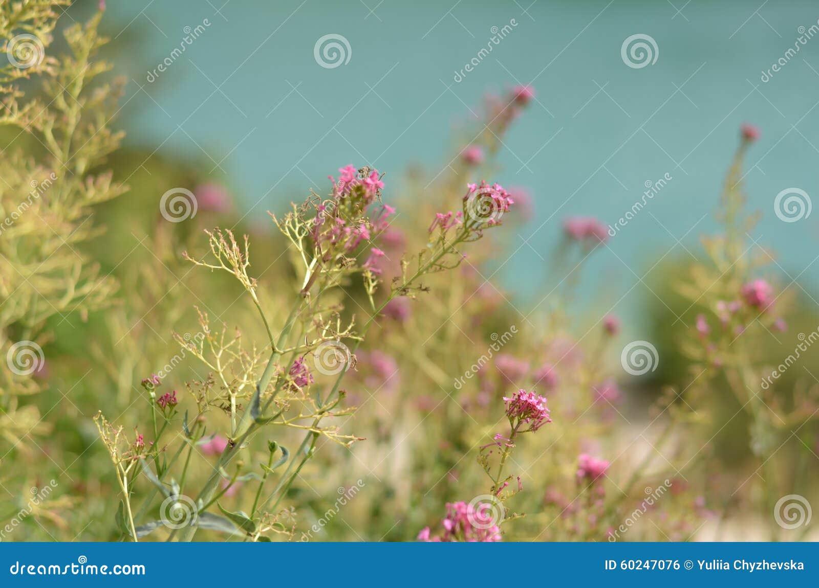 Розовые цветки лежа около озера фокус на цветке