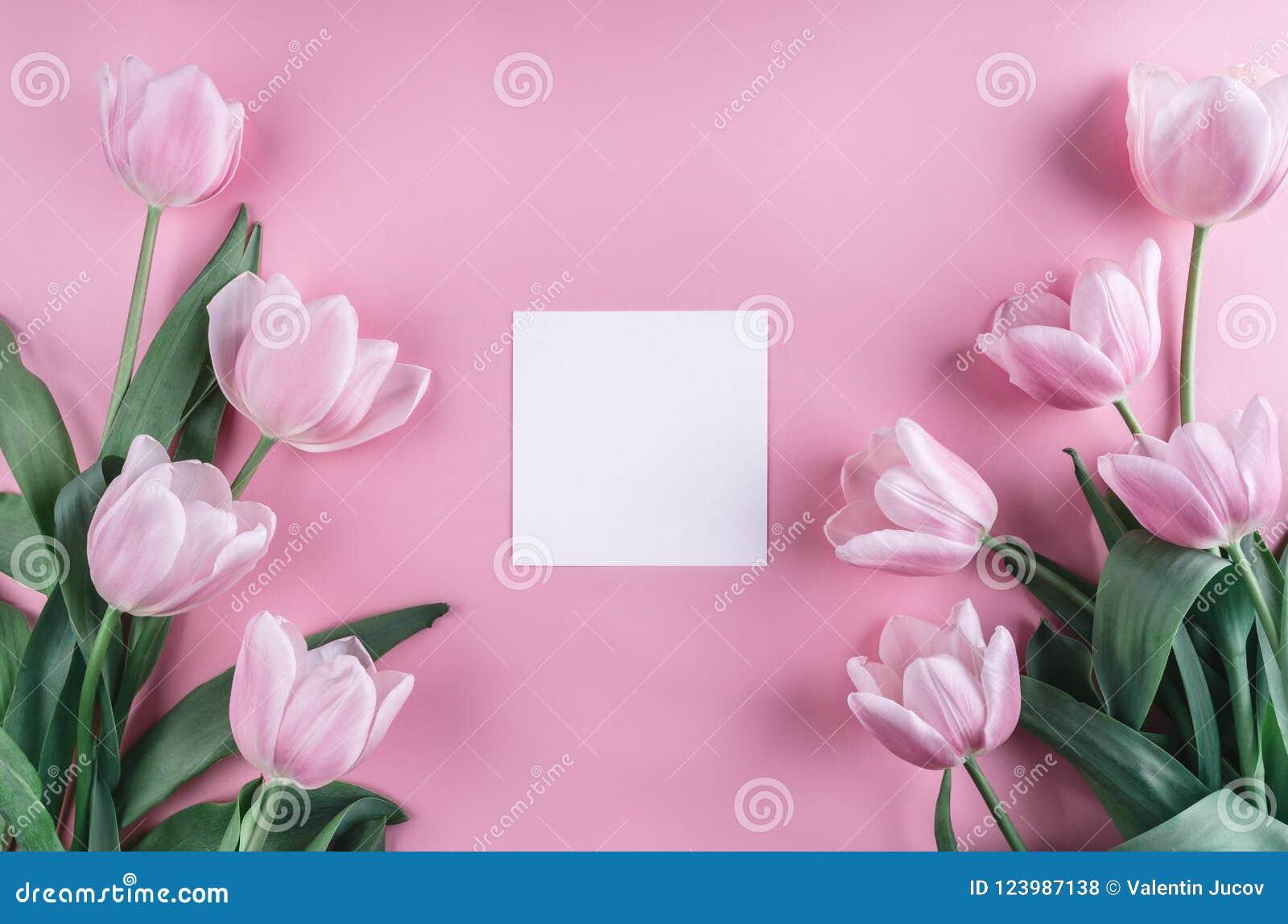 Розовые цветки и лист бумаги тюльпанов над светом - розовой предпосылкой Рамка или предпосылка дня валентинок Святого