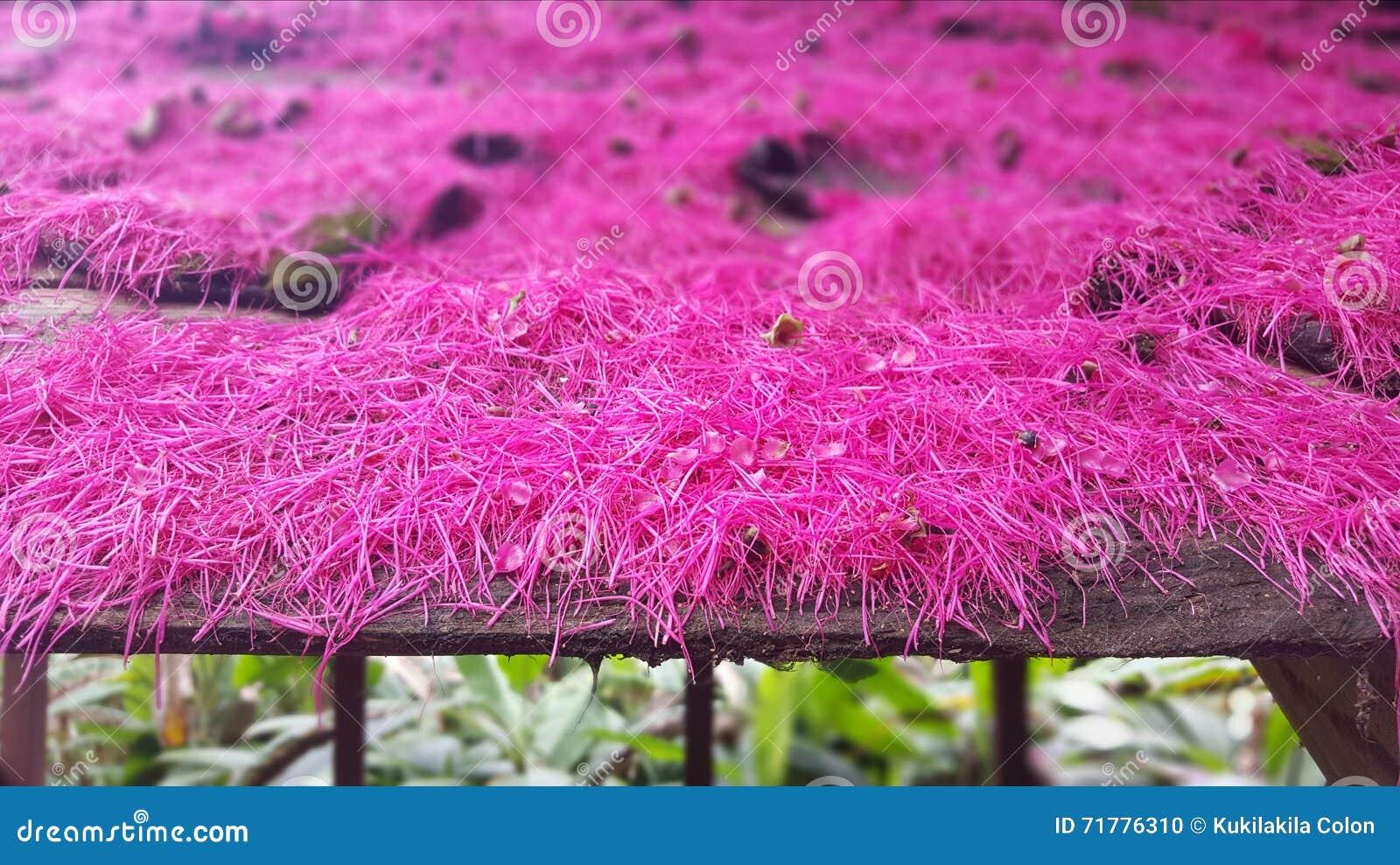 Розовые цветки на крыше