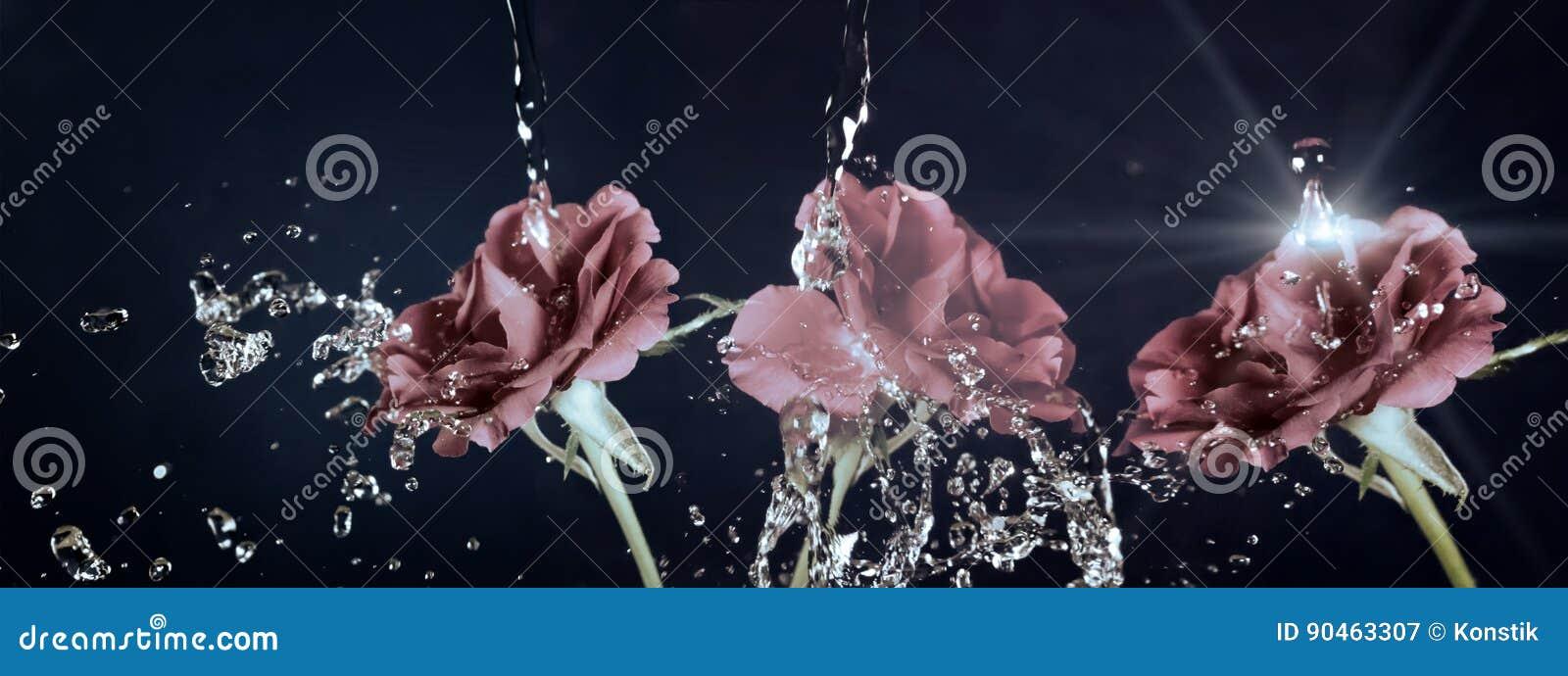 Розовый цветок в дожде, падения воды светя, год сбора винограда, ретро влияние