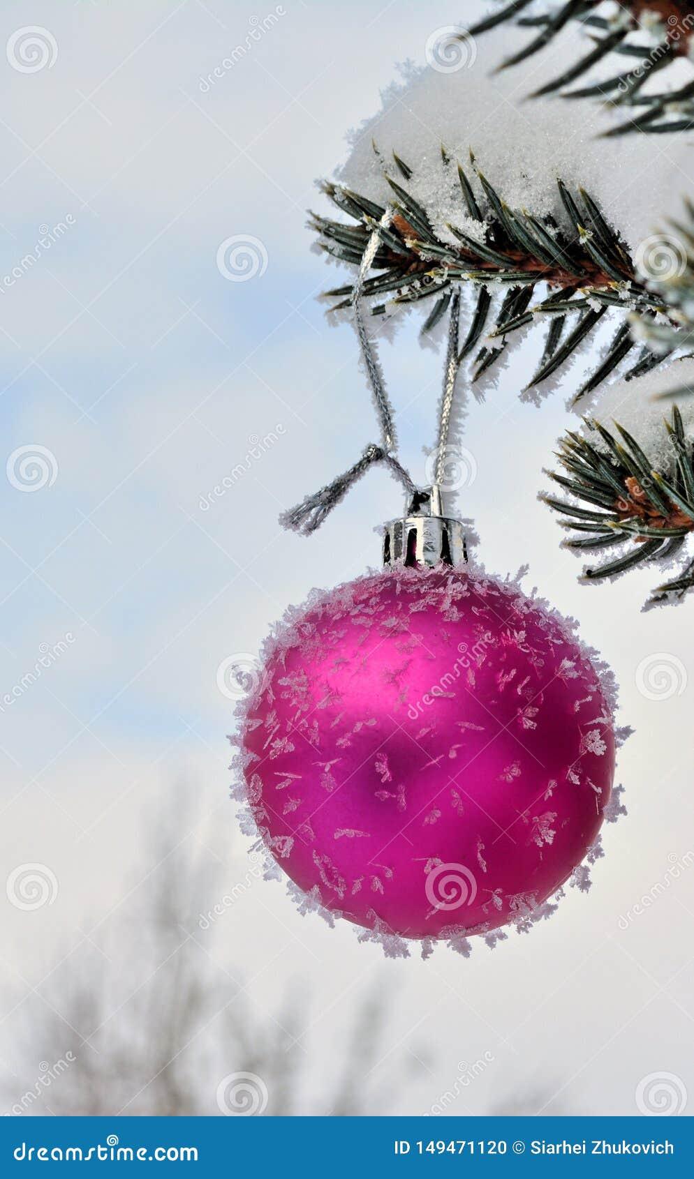 Розовый шарик Нового Года на ели в реальном маштабе времени с заморозком и снегом