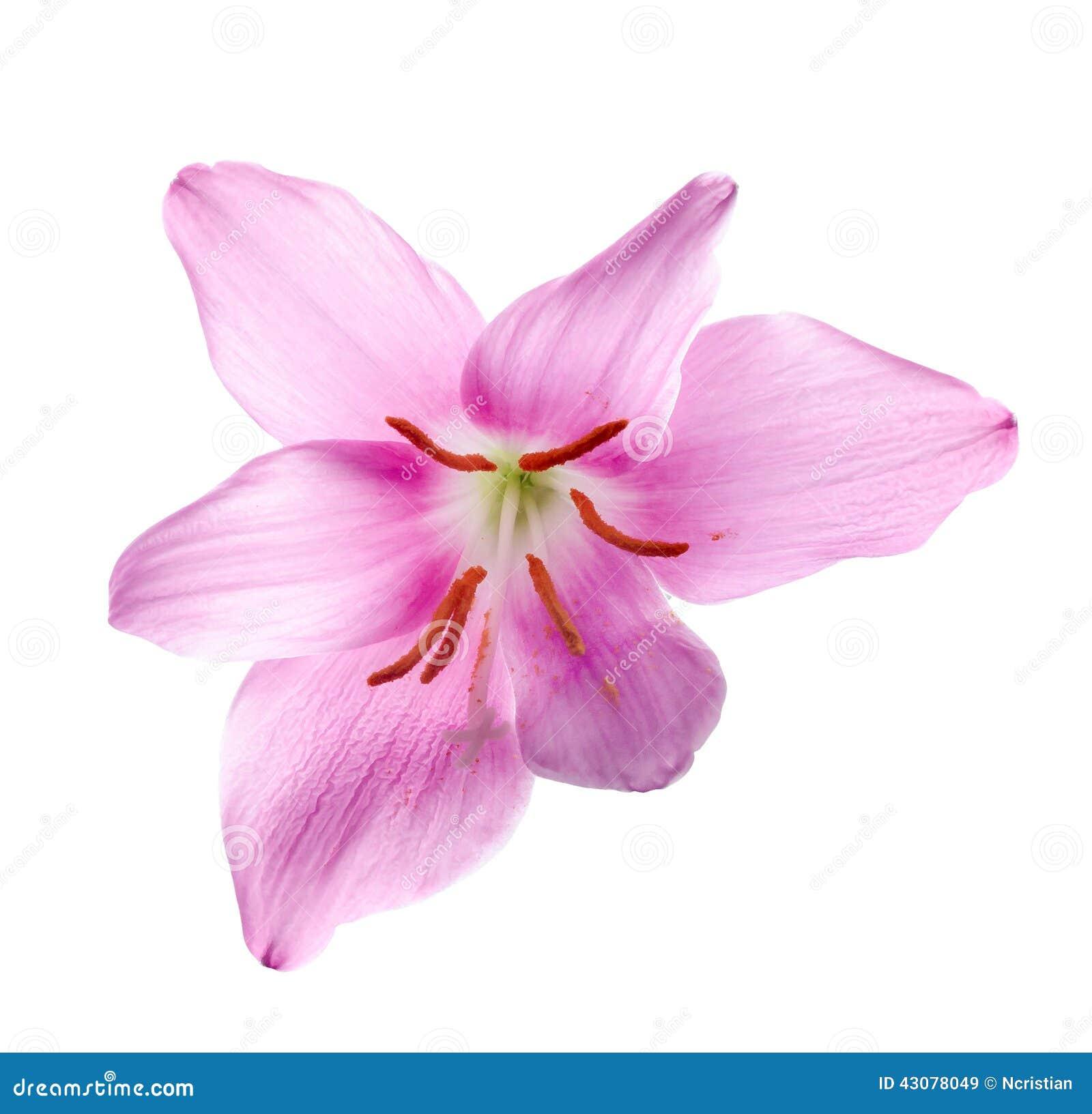 rosa blommor namn