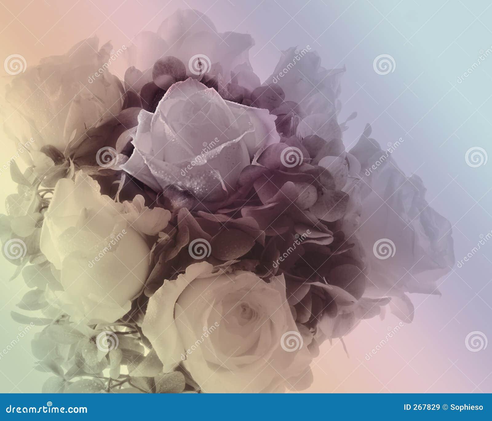 розы букета мягкие
