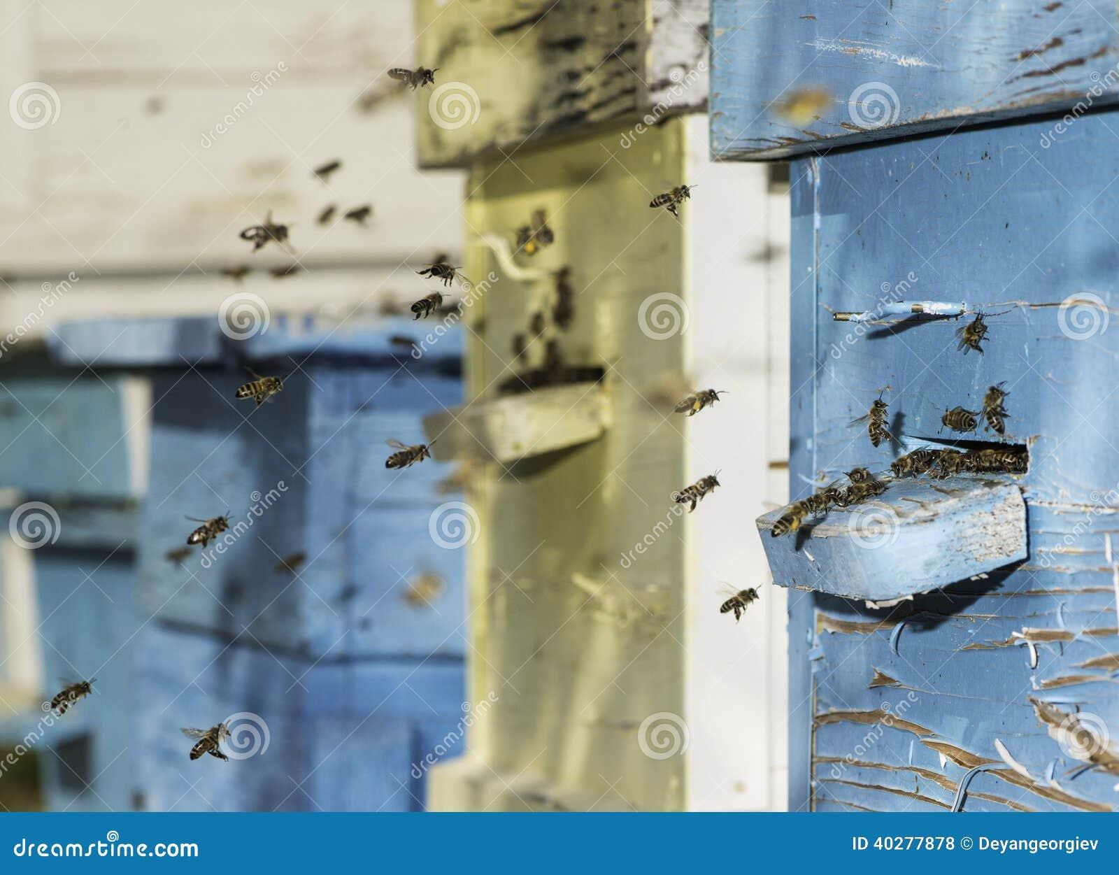 Рой пчел летает к улью