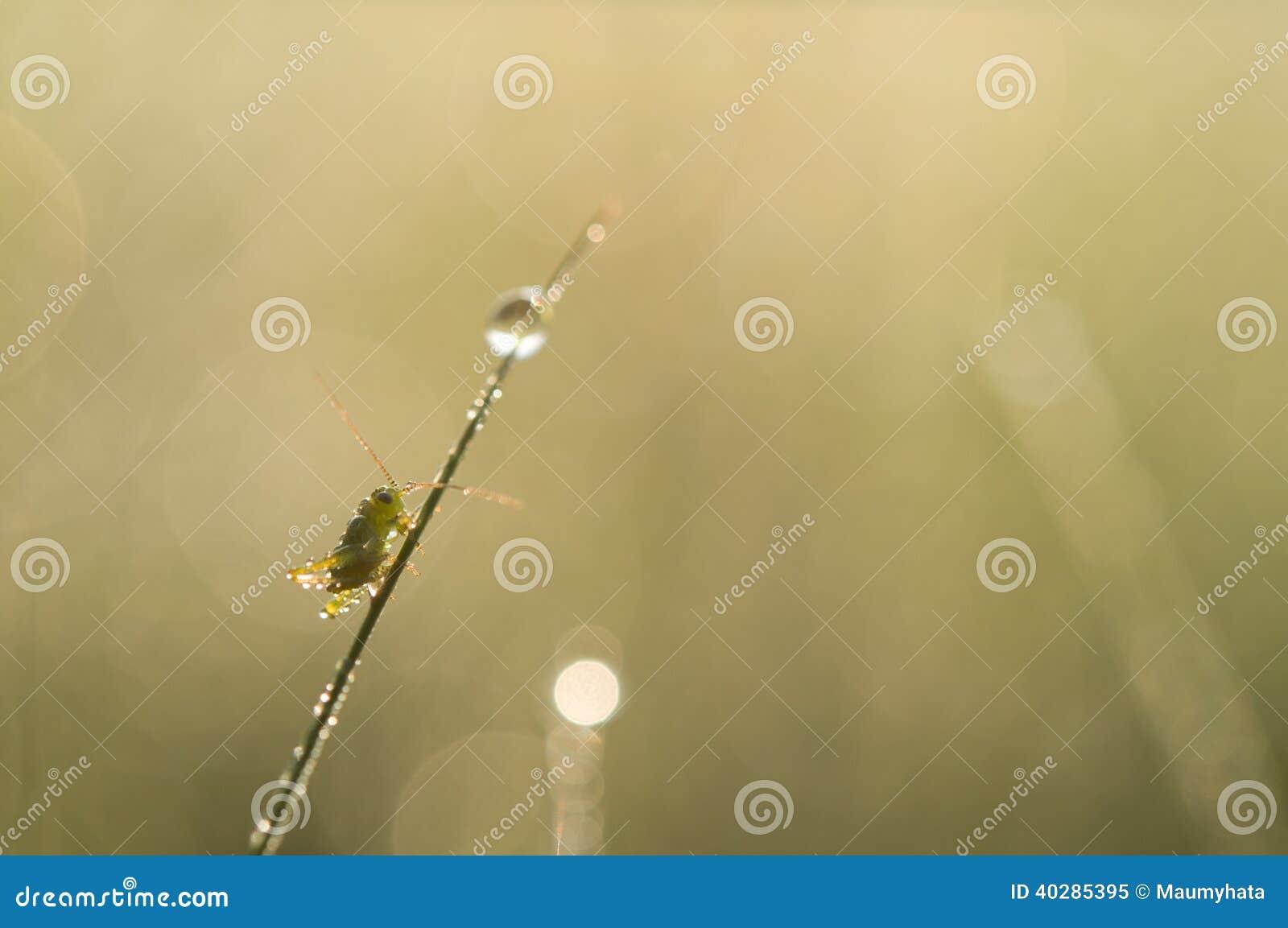 Роса в траве