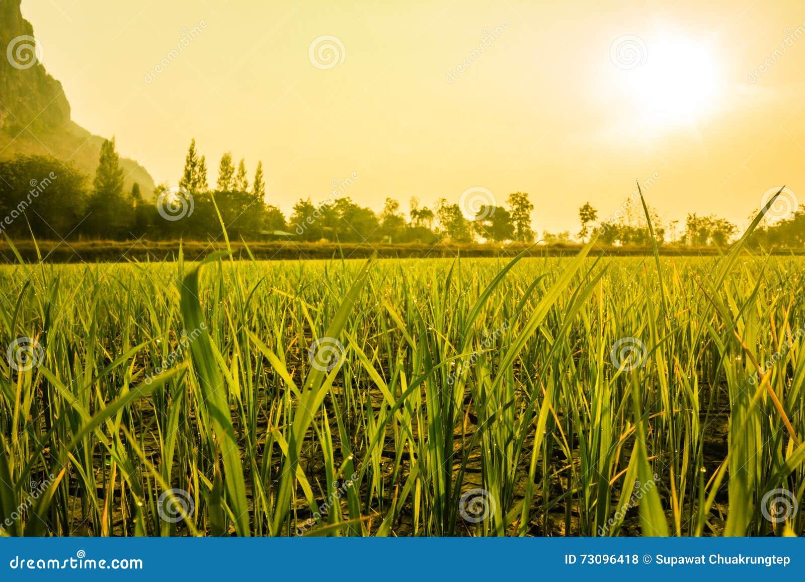 Роса на ферме