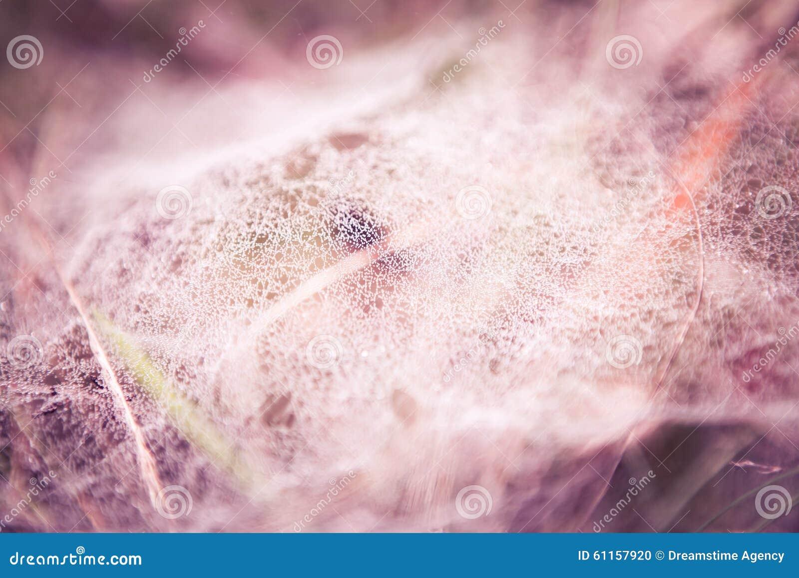 Роса утра на сети паука