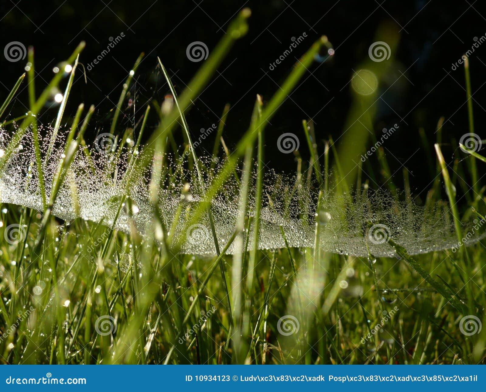 росная трава