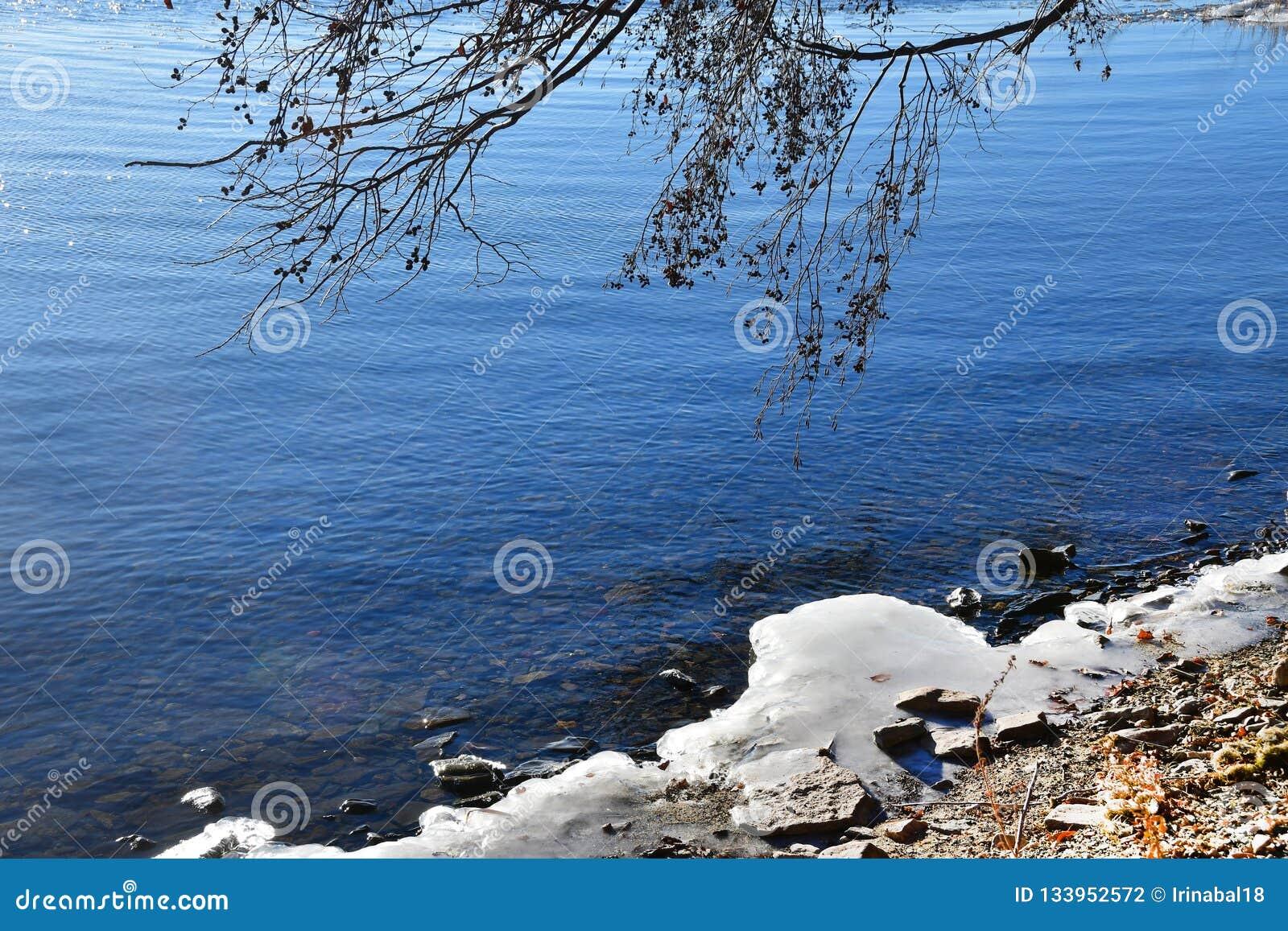 Россия Область Челябинска Хобот дерева, обхватыванный к воде озера Uvildy и ледяного берега