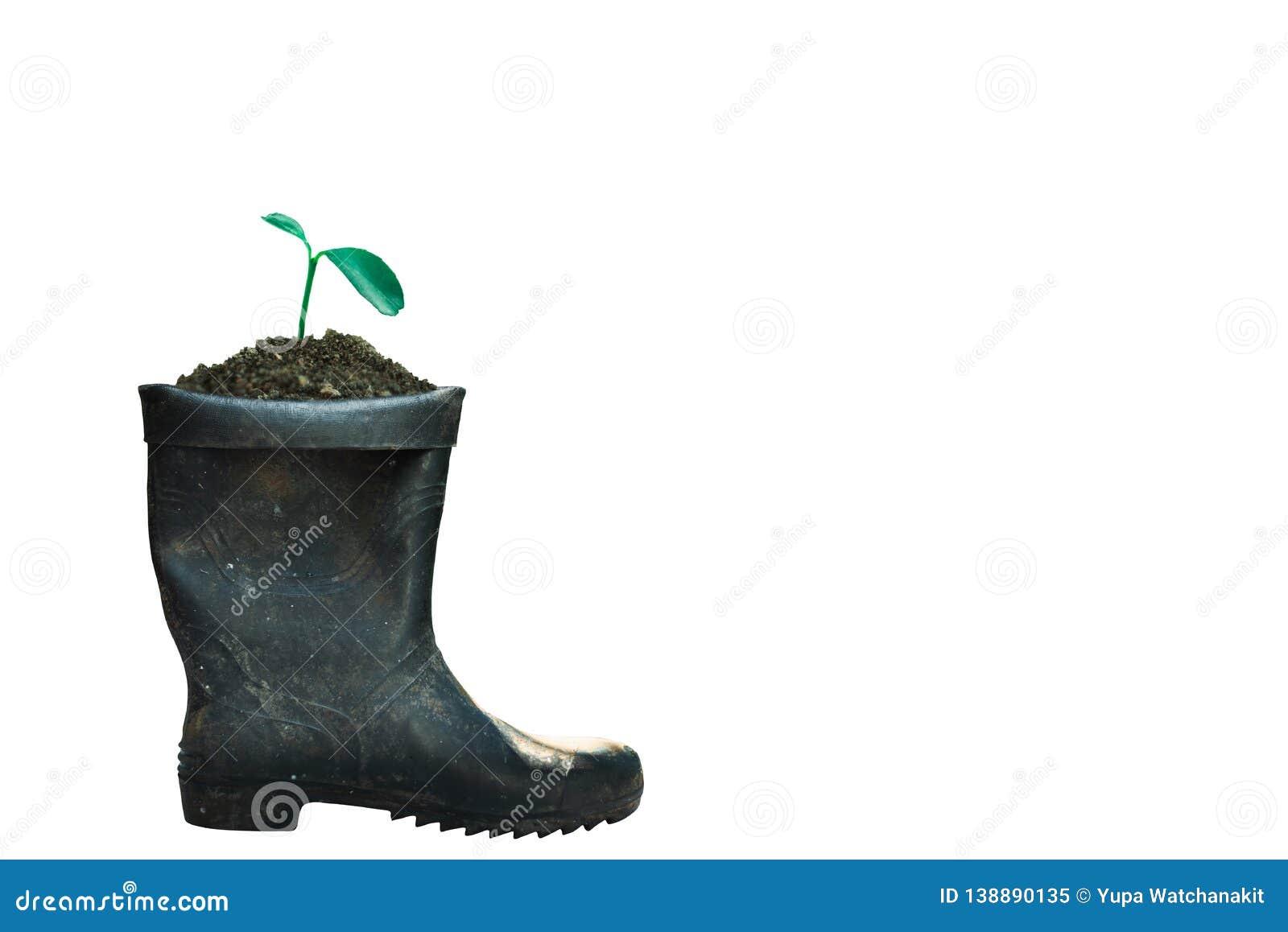 росток растя в ботинке