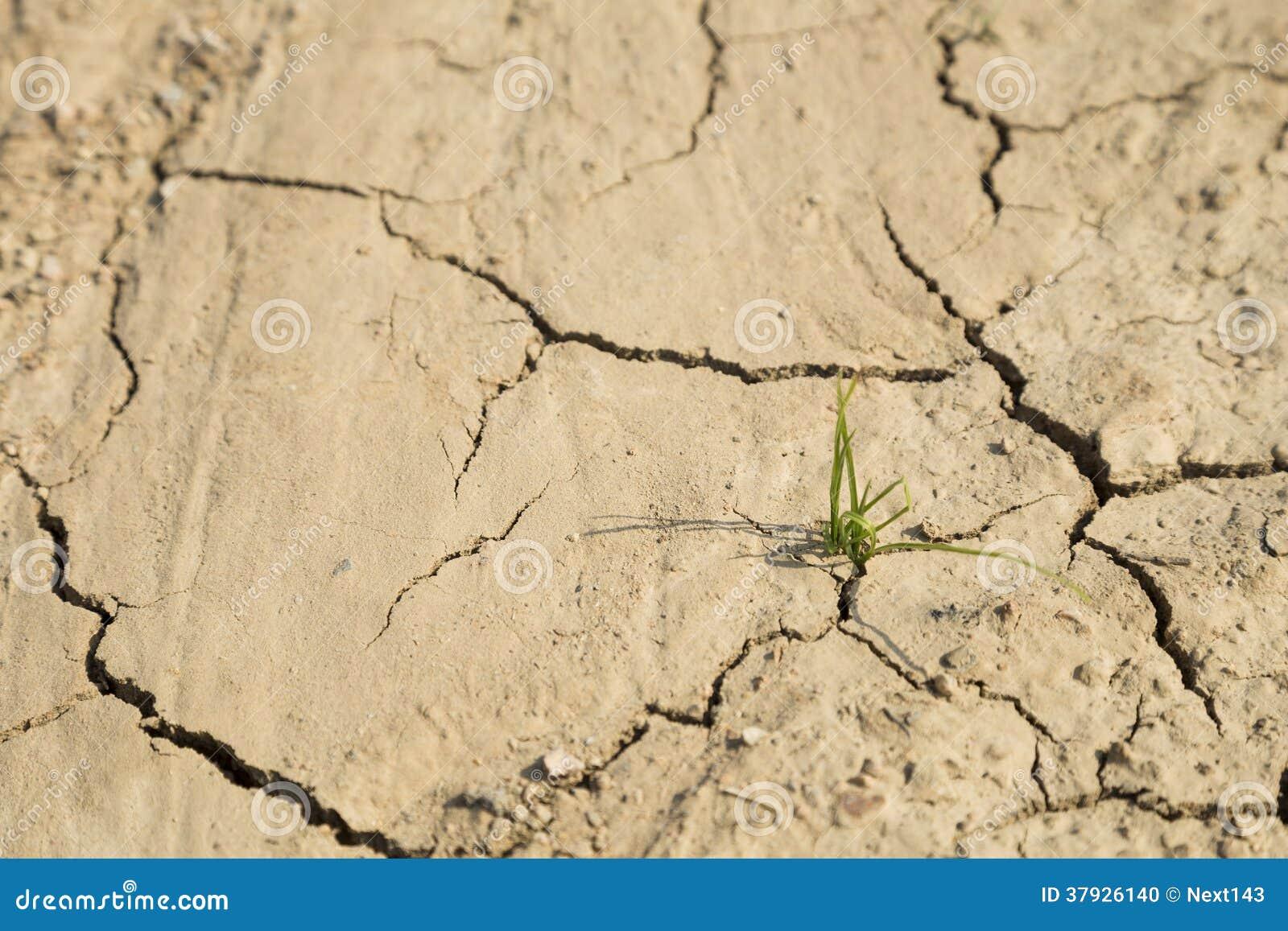 Рост зеленой травы на засушливой области