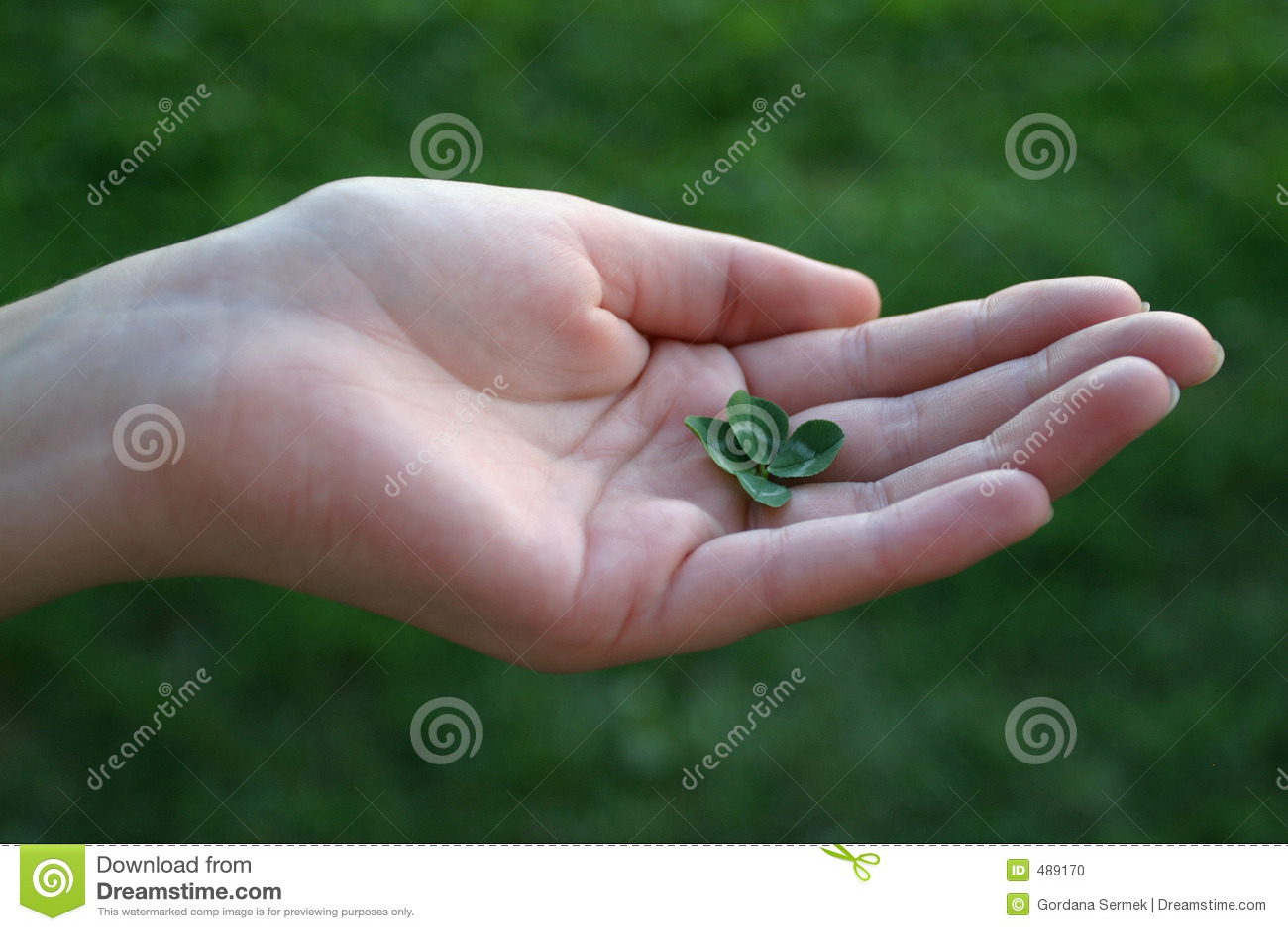 рука клевера fourleafed женщиной