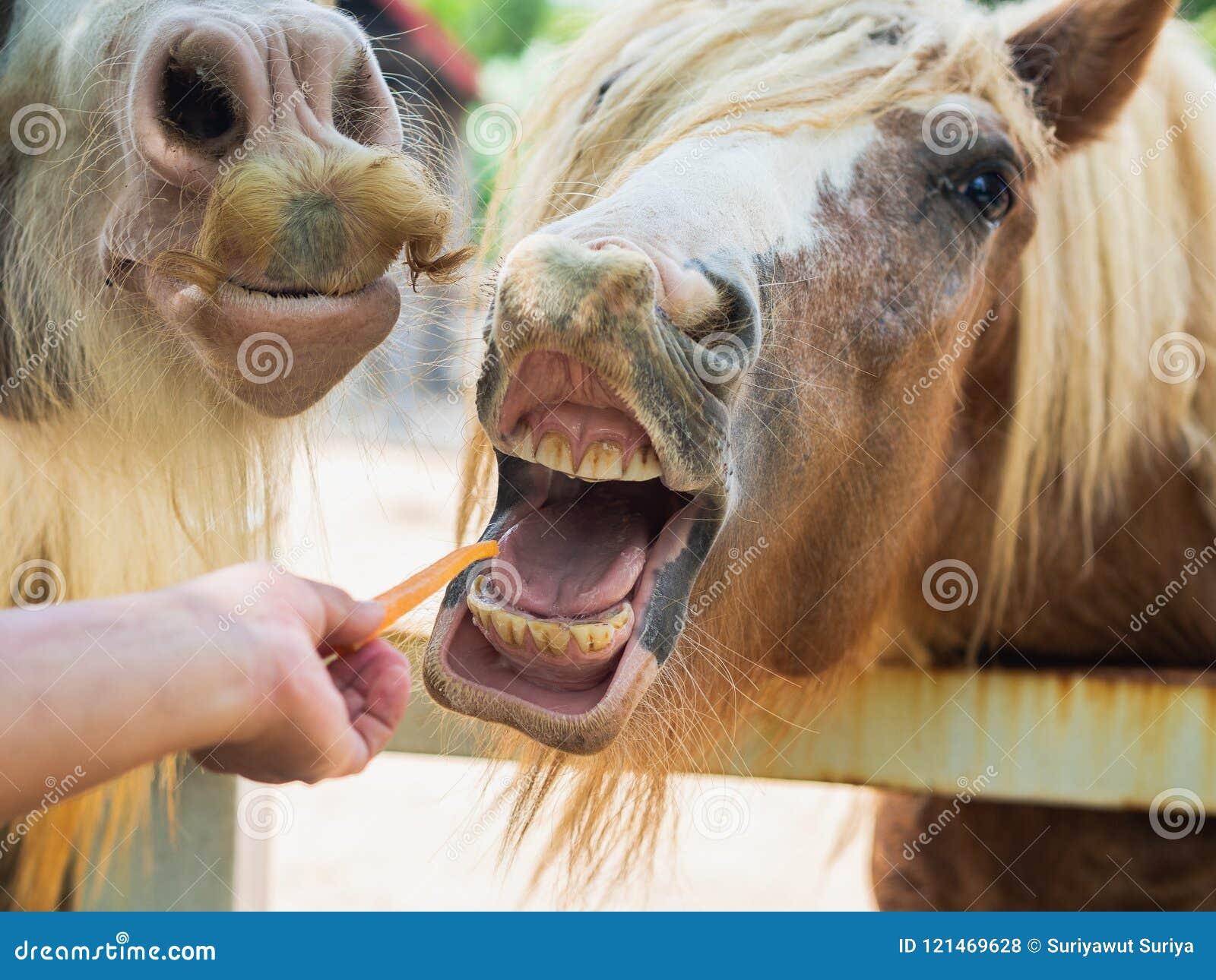 Рука подавая лошадь с морковью Концепция любимчика Fedding
