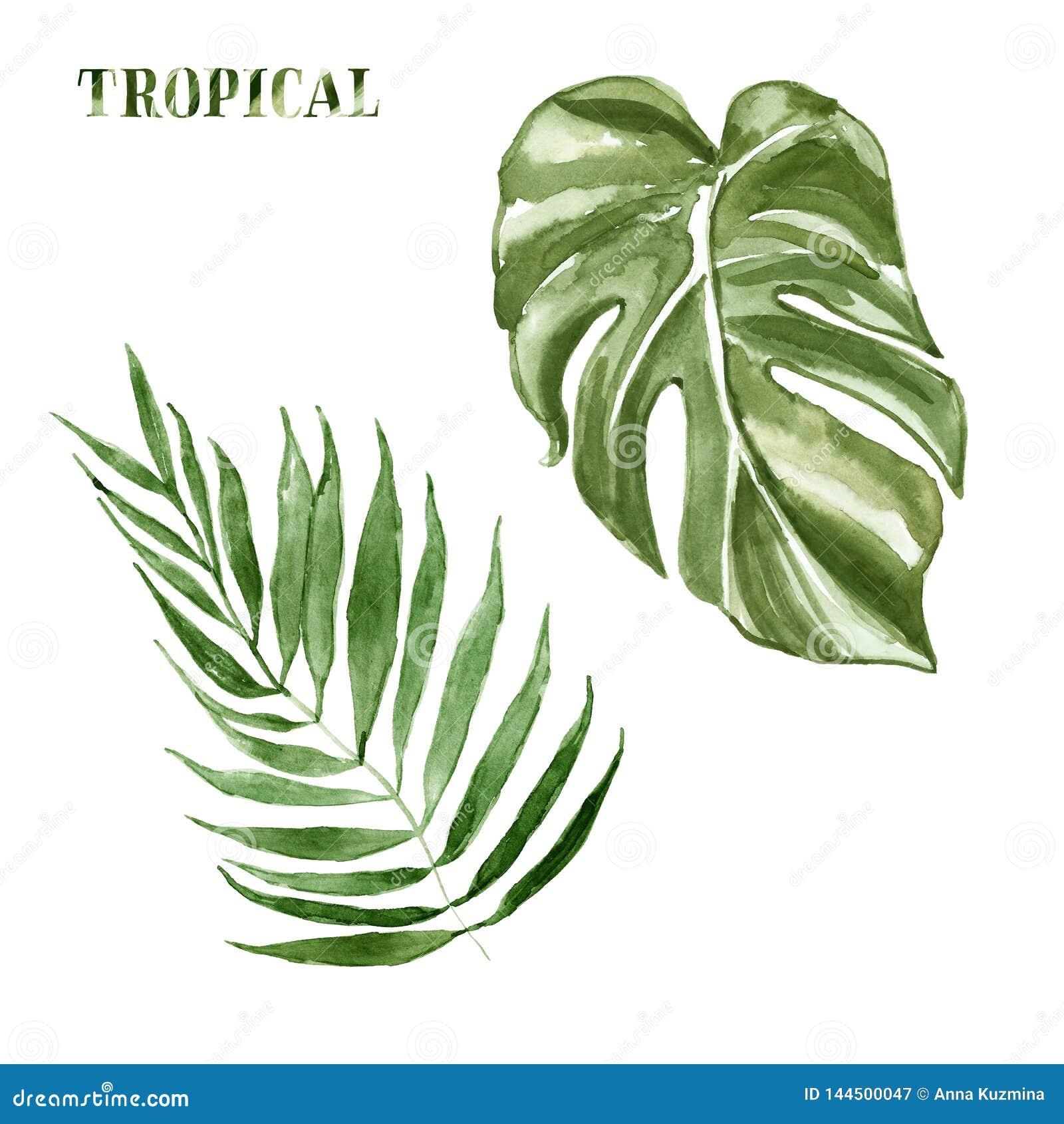 Листья набор акварели тропические, изолированный на белой предпосылке Рука покрасила иллюстрацию лета ботаническую экзотических з