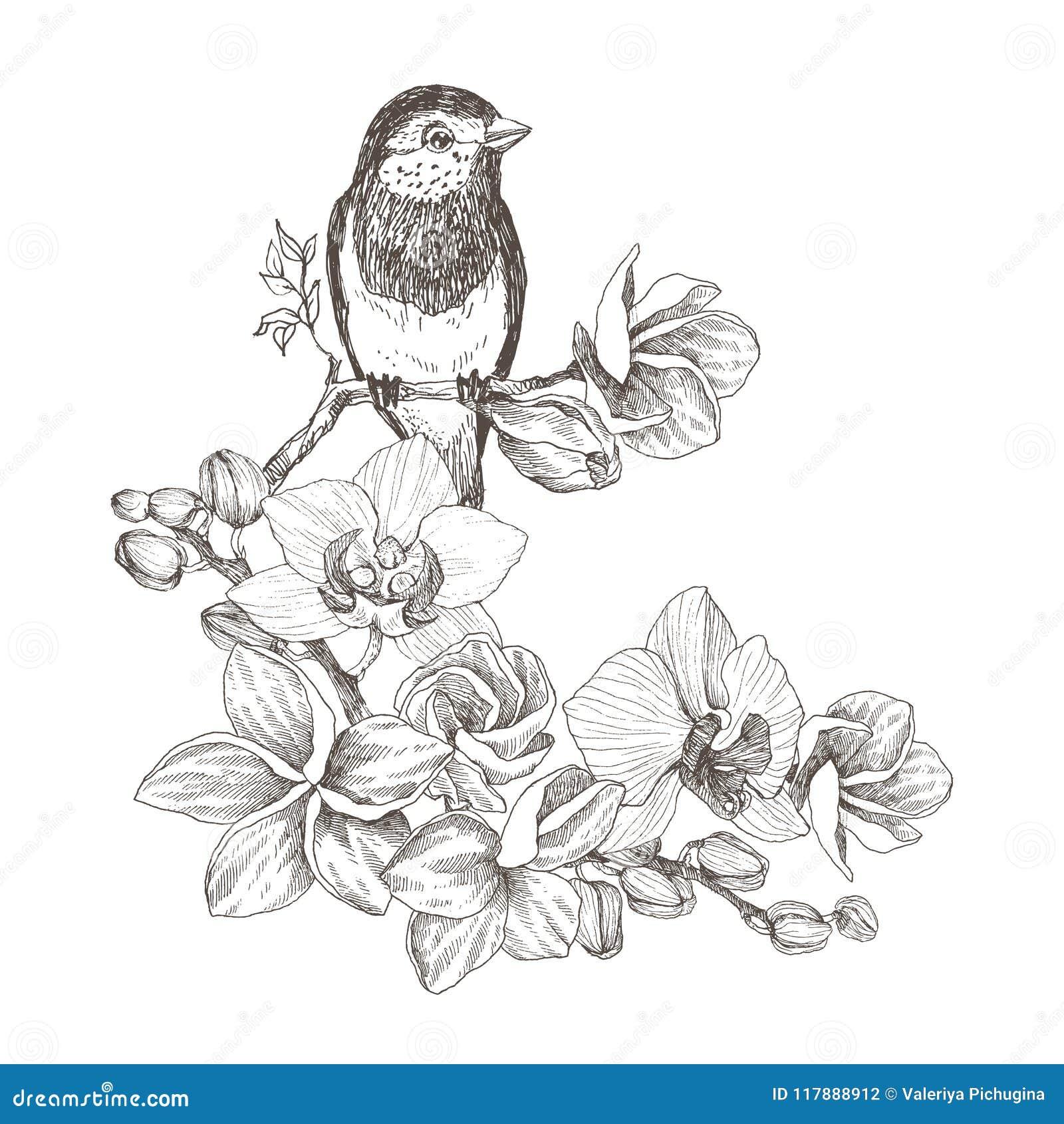 Рука птицы нарисованная в винтажном стиле с тропическими цветками Птица весны сидя на ветвях цветения орхидеи линейно
