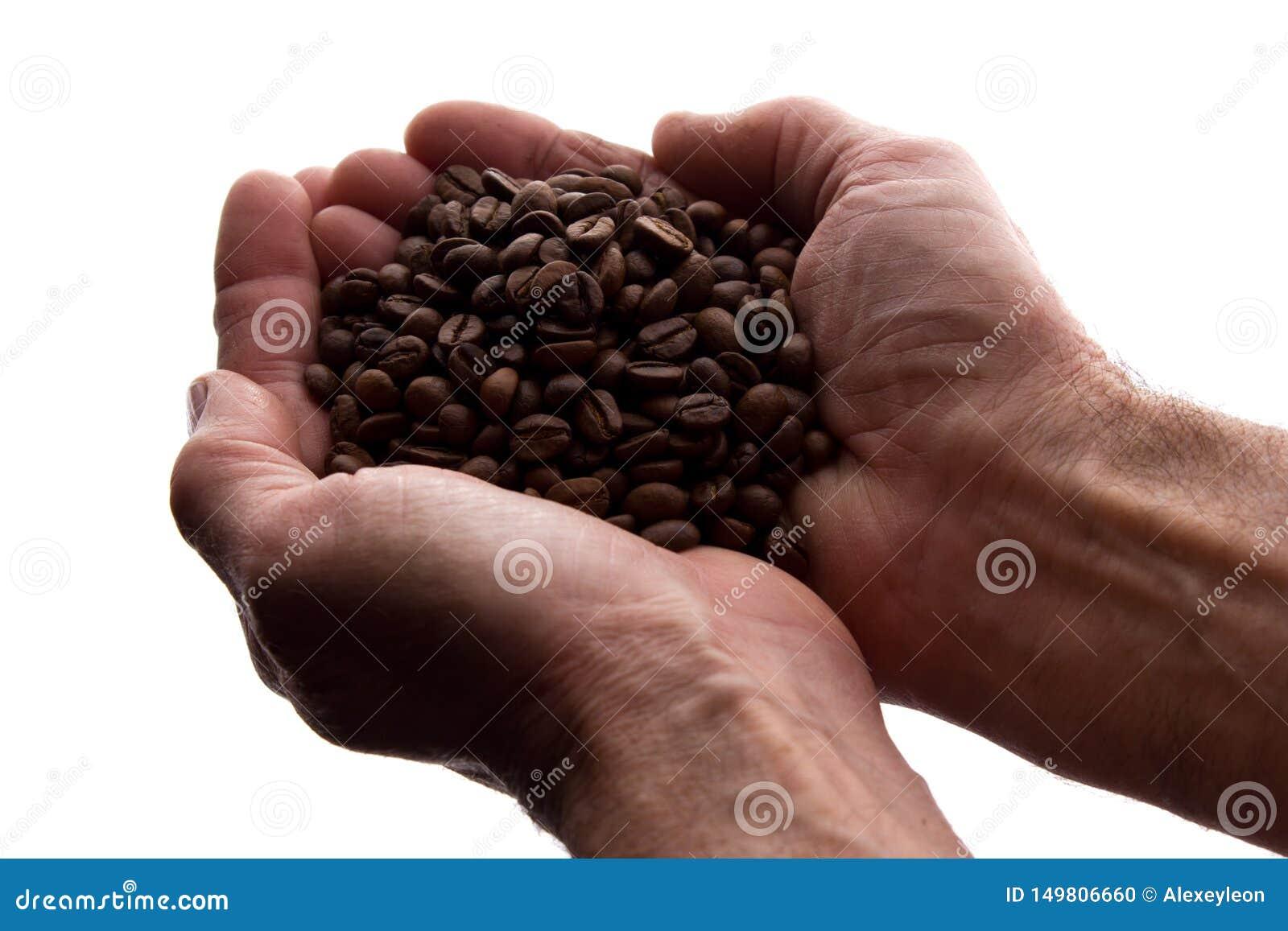 Рука человека пригорошня кофейных зерен - силуэт