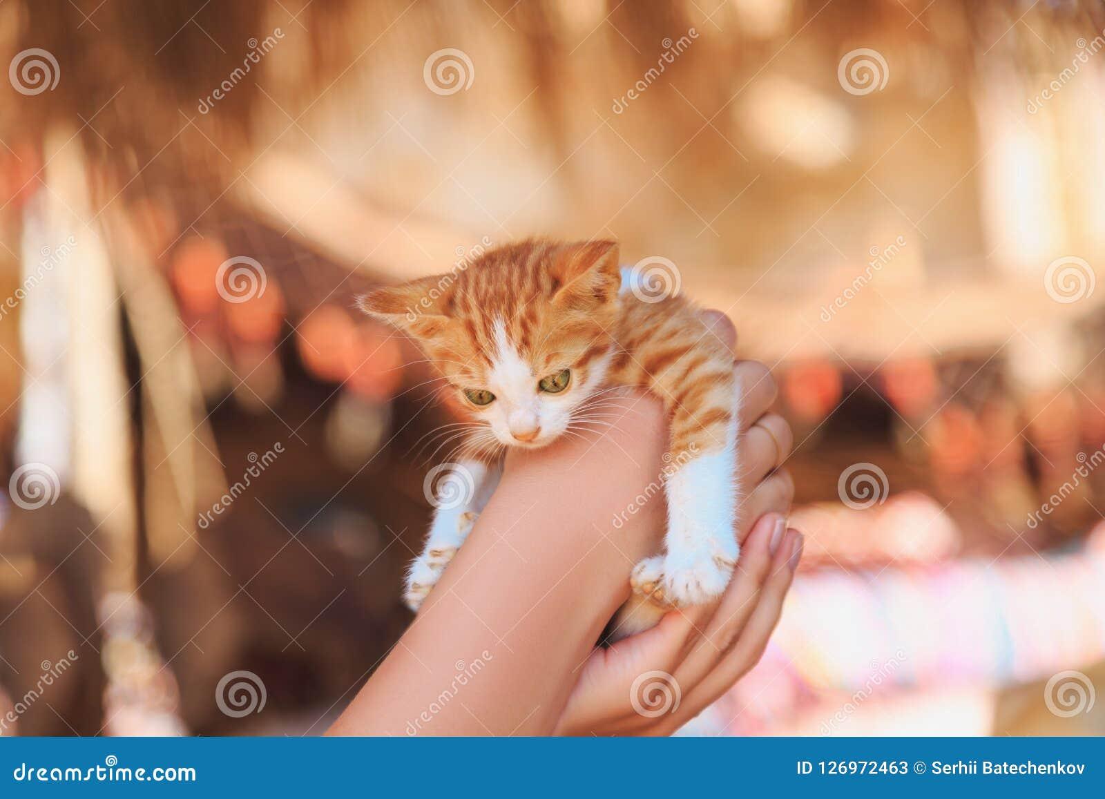 Руки держа маленького котенка