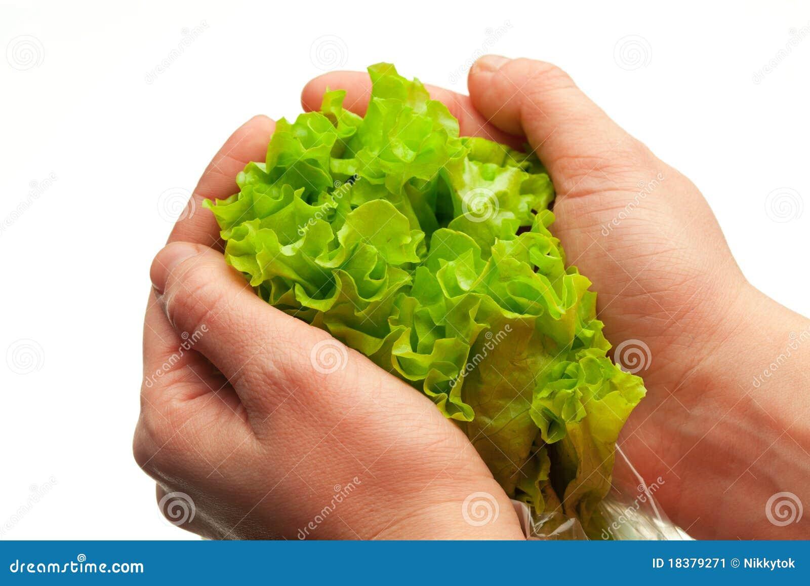 руки держа салат