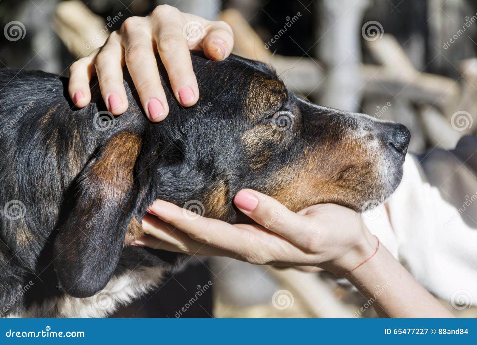 Руки женщины ласкают бездомную собаку