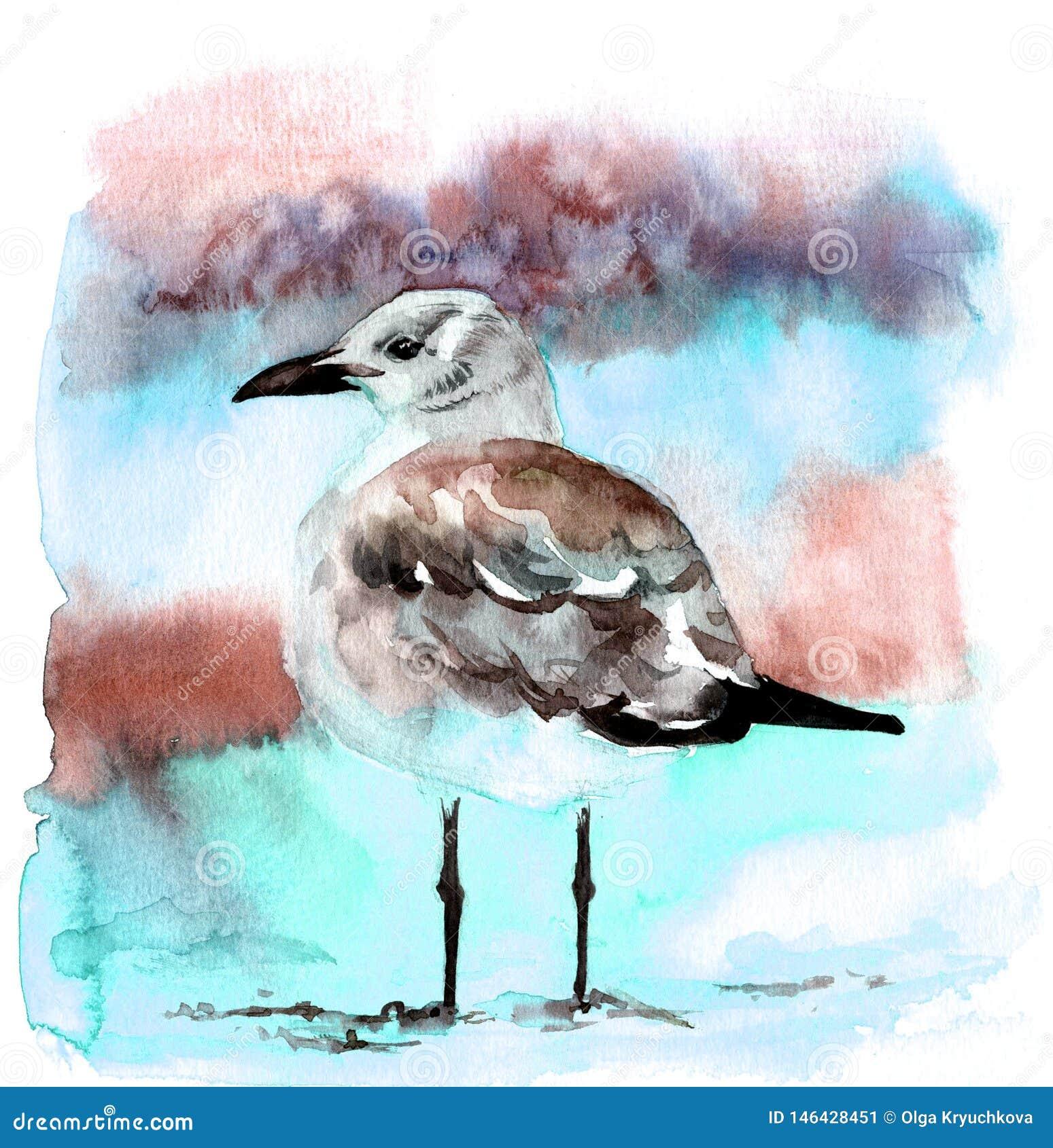 Руки чайки акварели иллюстрация красивой вычерченная
