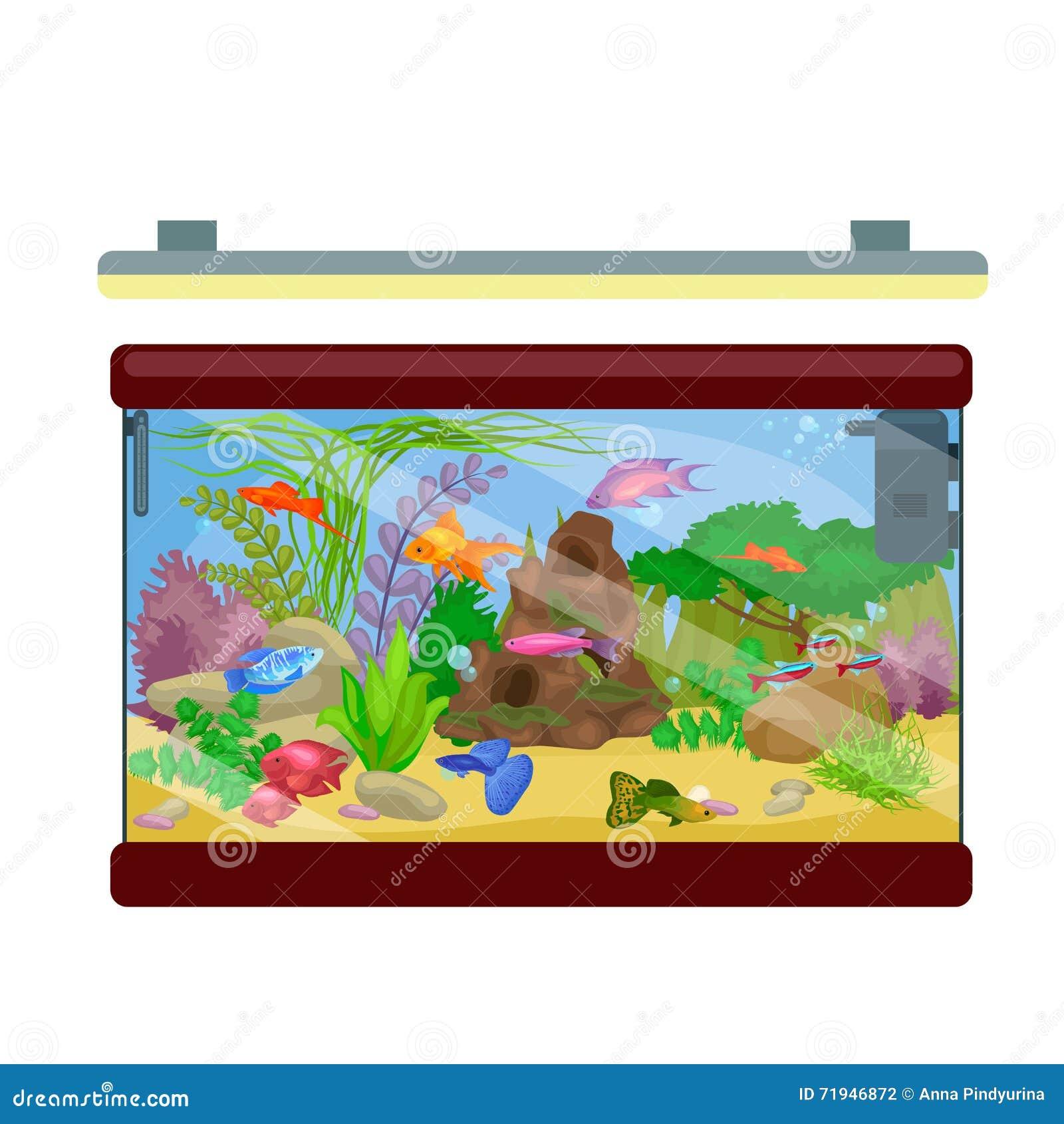 Рыбы аквариума, морская водоросль подводная, морское животное изолированное на белизне