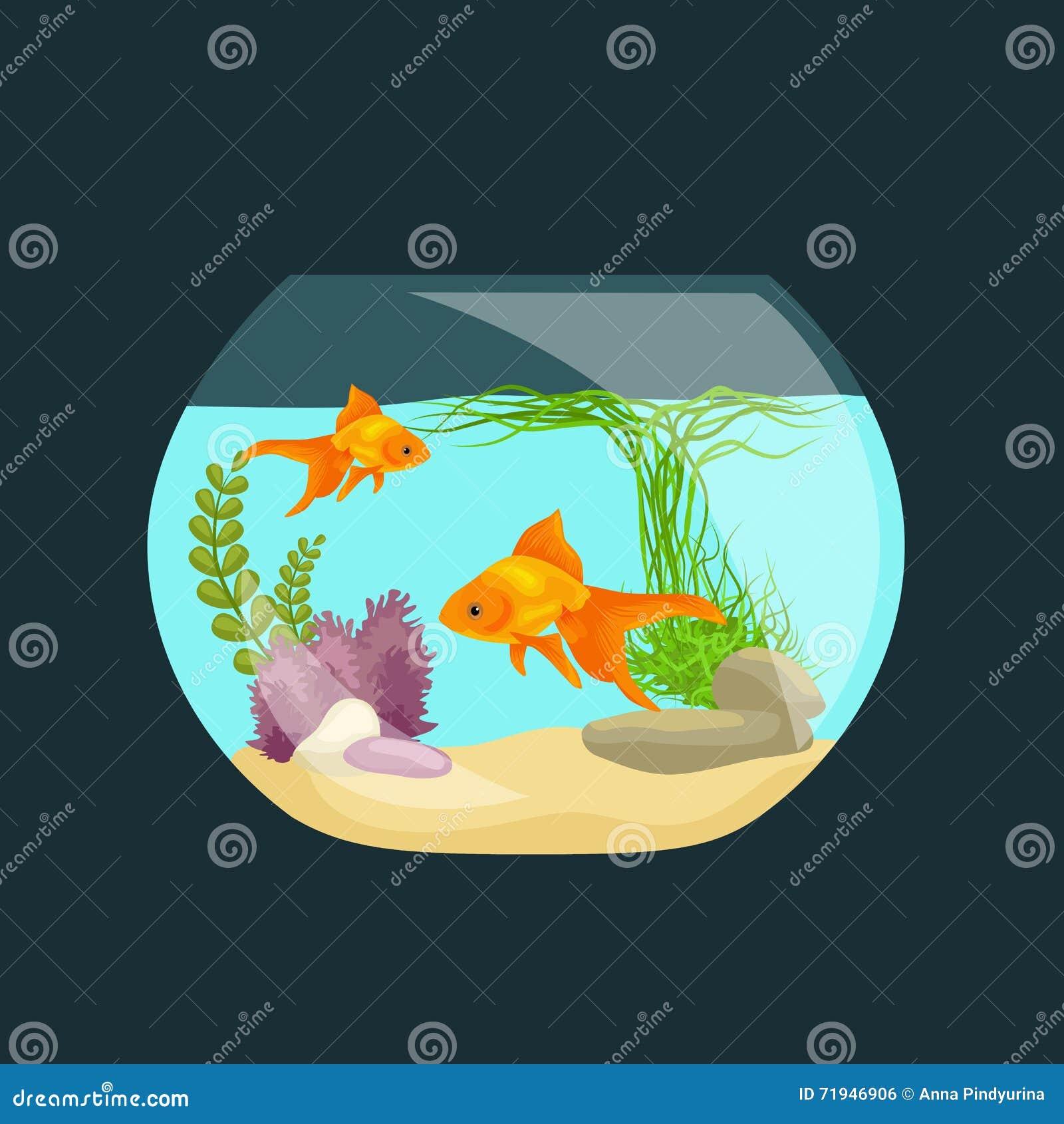 Рыбы аквариума, морская водоросль подводная, танк изолированный на темной предпосылке