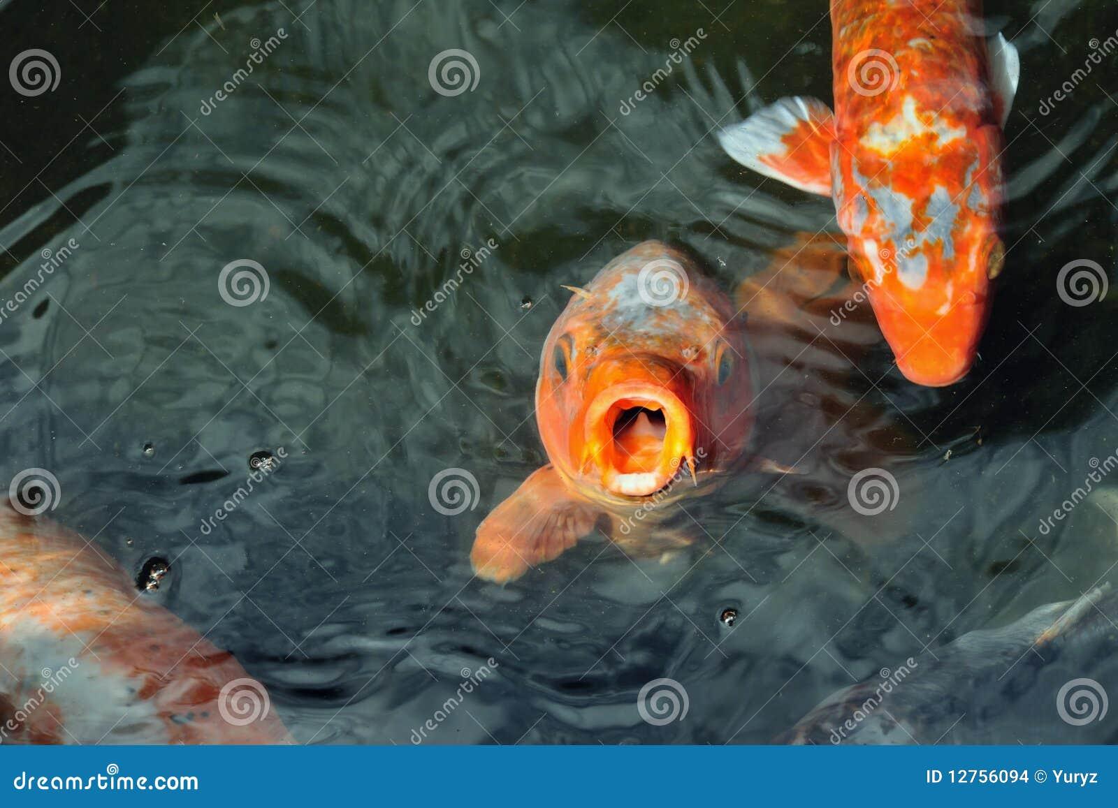 рыбы голодные