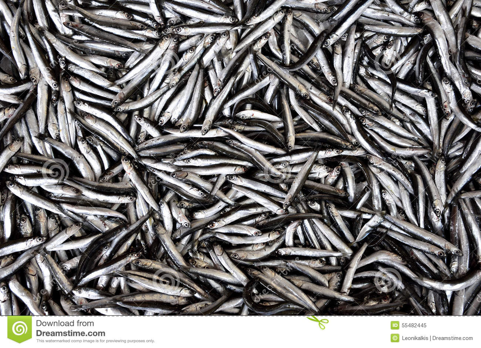 Рыбы камсы