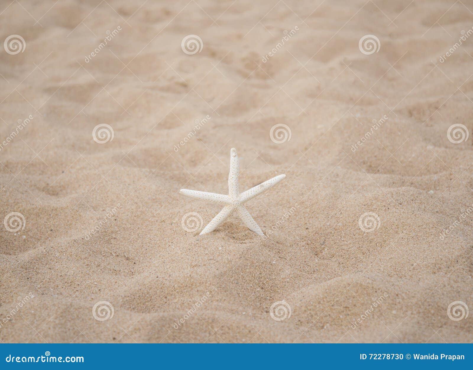 Download рыбы предпосылки зашкурят звезду Конец-вверх и отборные рыбы звезды фокуса Стоковое Фото - изображение насчитывающей baxter, естественно: 72278730