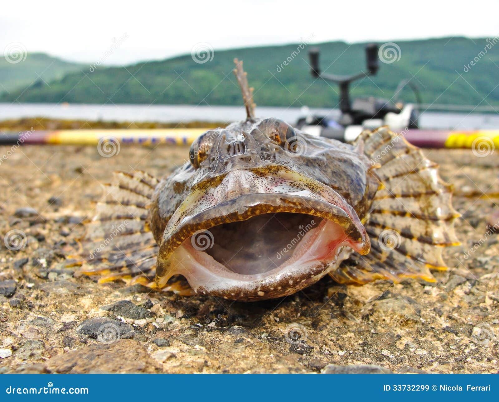 Рыбы скорпиона рыболовства
