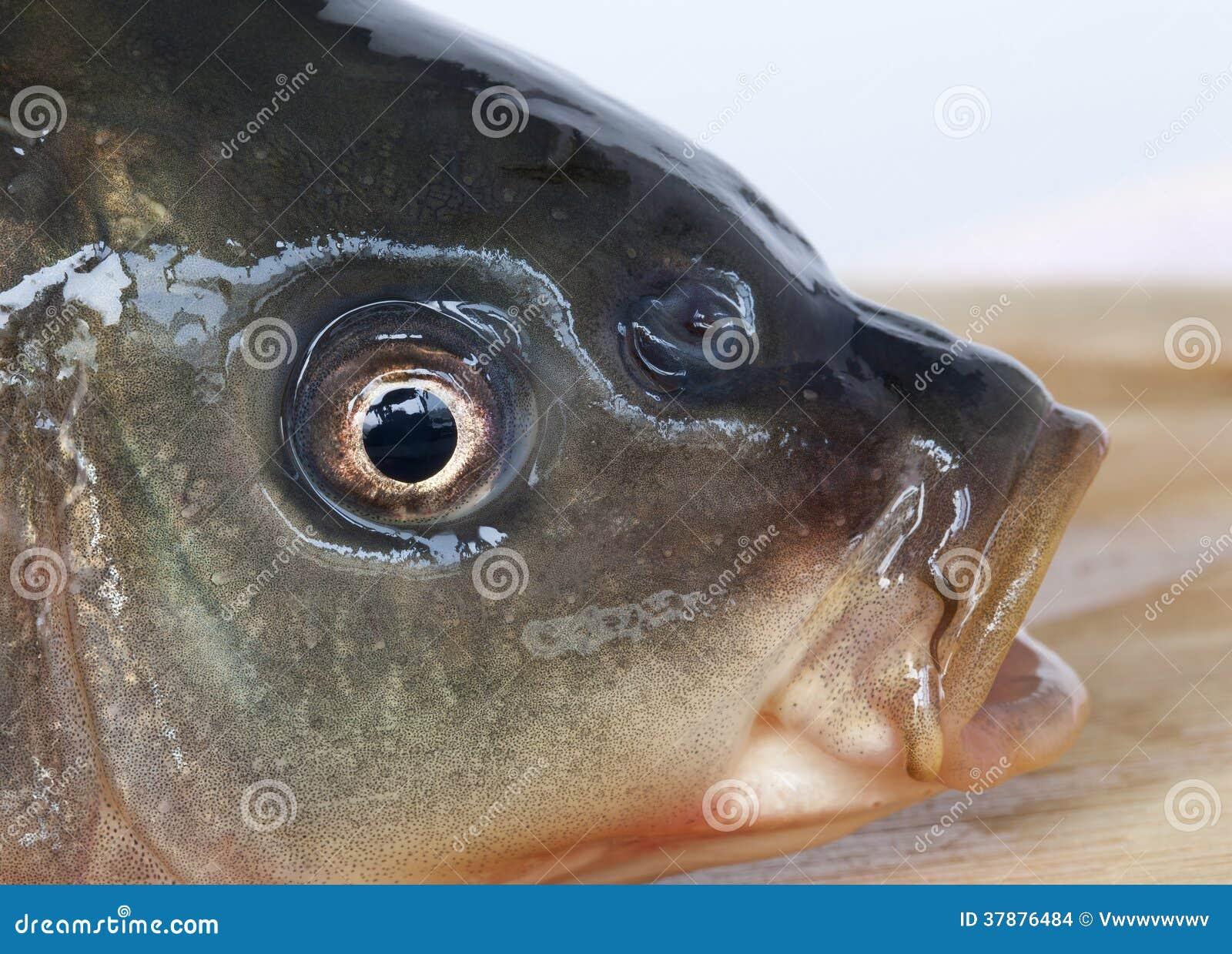 Рыбы хлебать