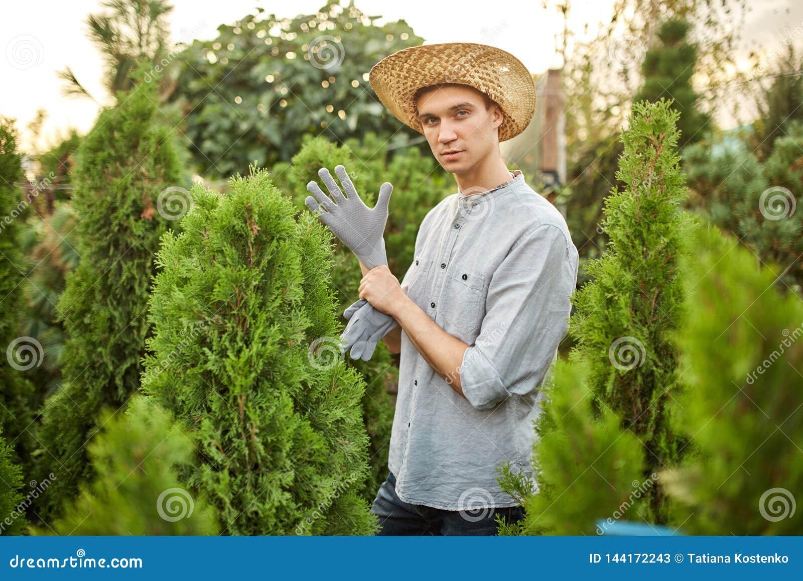 Садовник Гай в соломенной шляпе кладет перчатки сада на его руки в питомник-сад с много thujas на теплое солнечном