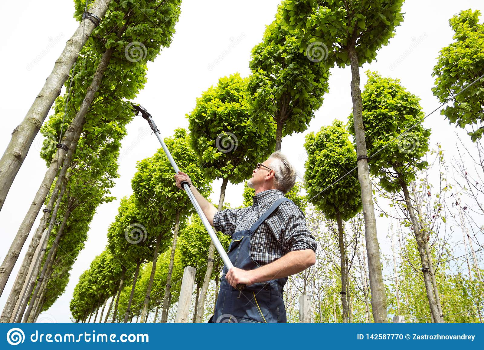 Садовник позаботится о молодые деревья
