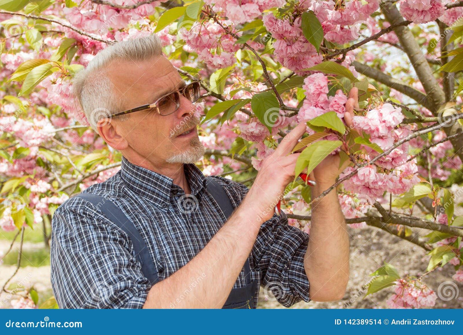 Садовник стоит на заднем плане цветя дерева, смотрящ цветки