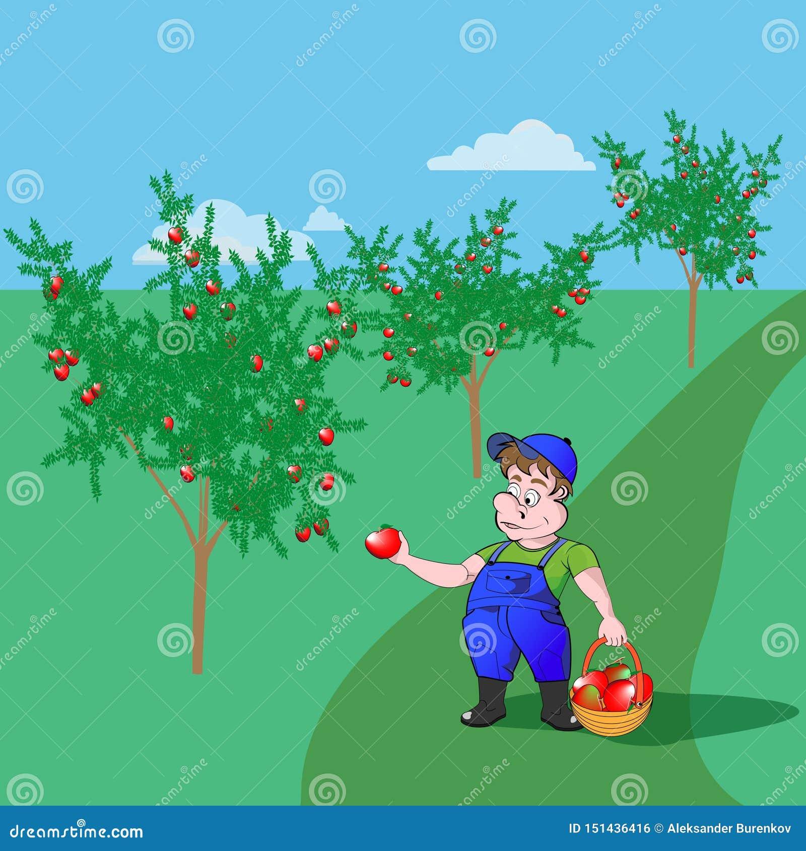 Садовник с яблоками