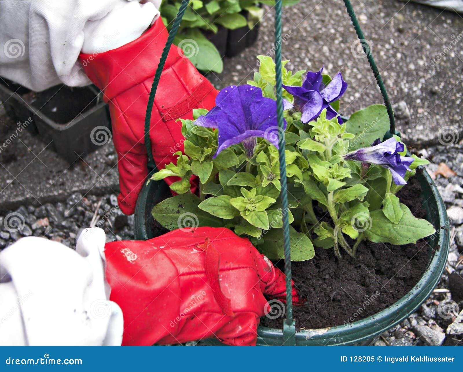 садовничая I