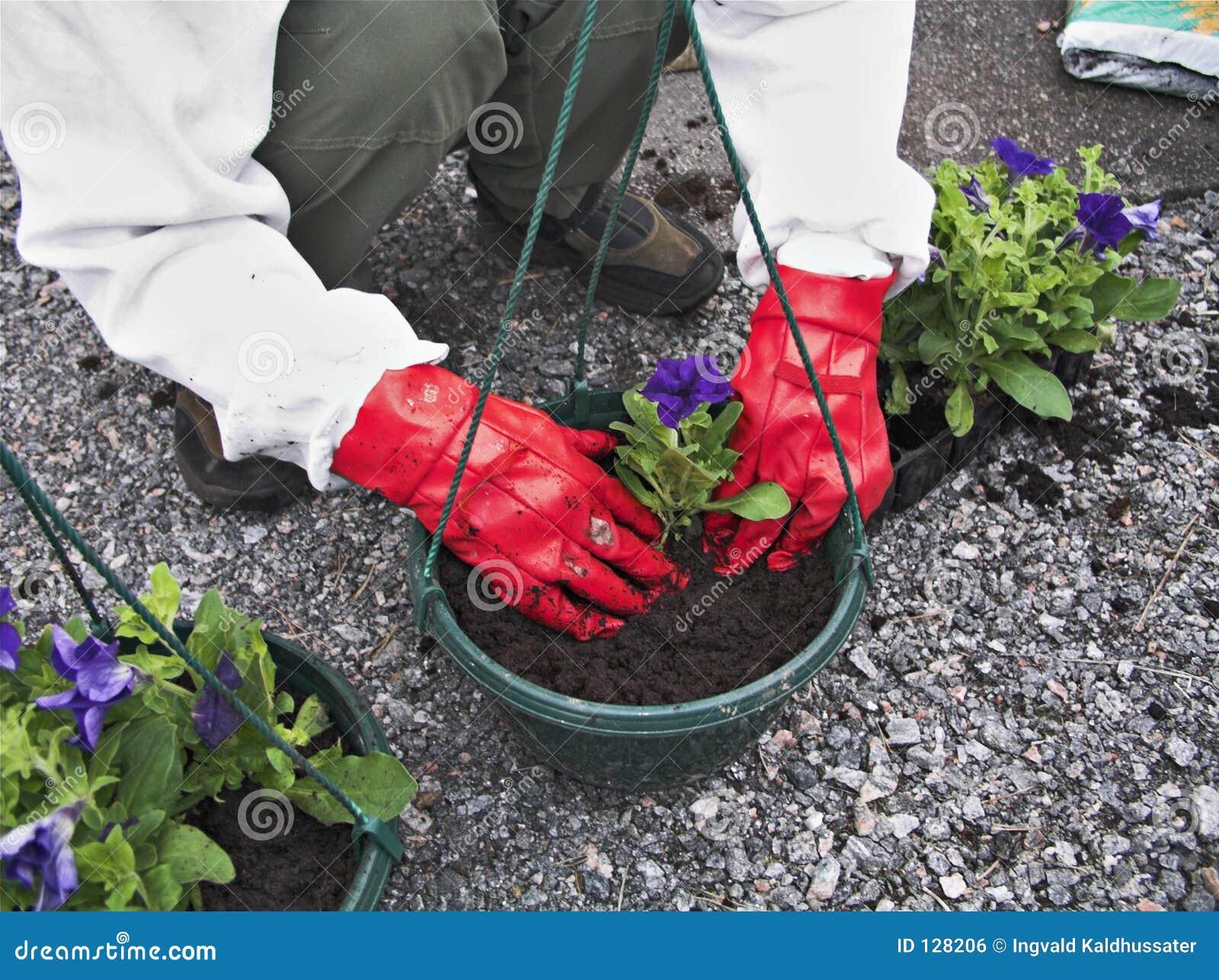 садовничая ii
