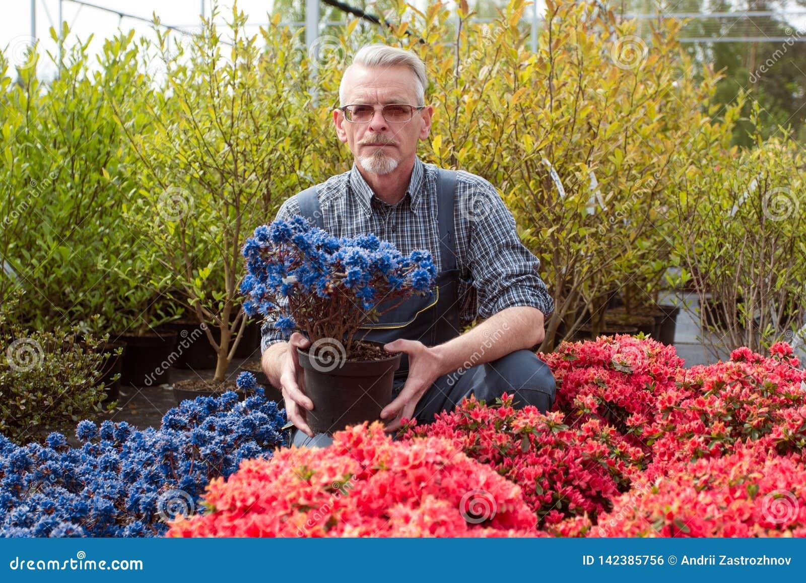 Садовый центр менеджера около окна магазина с цветками Он держит цветочный горшок