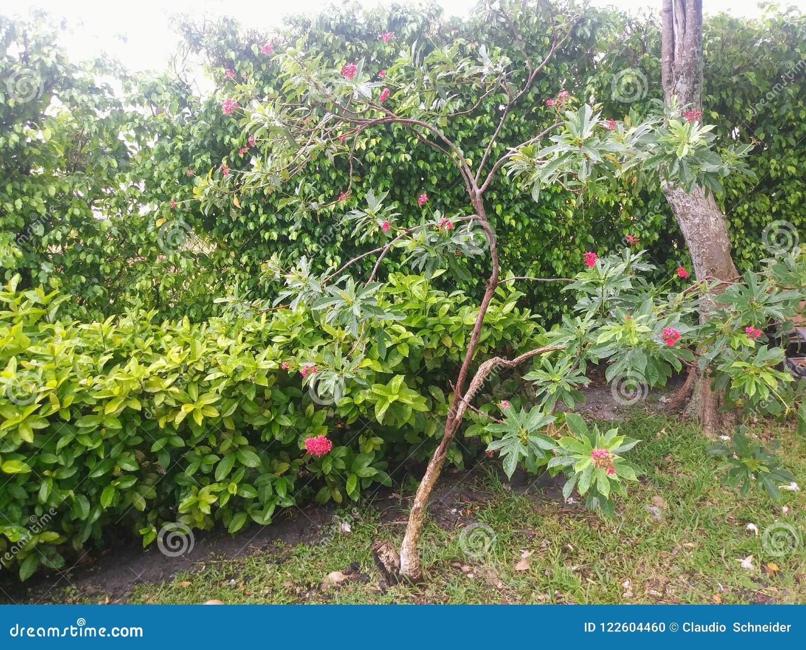 Сад в Майами, Флориде Соединенных Штатах
