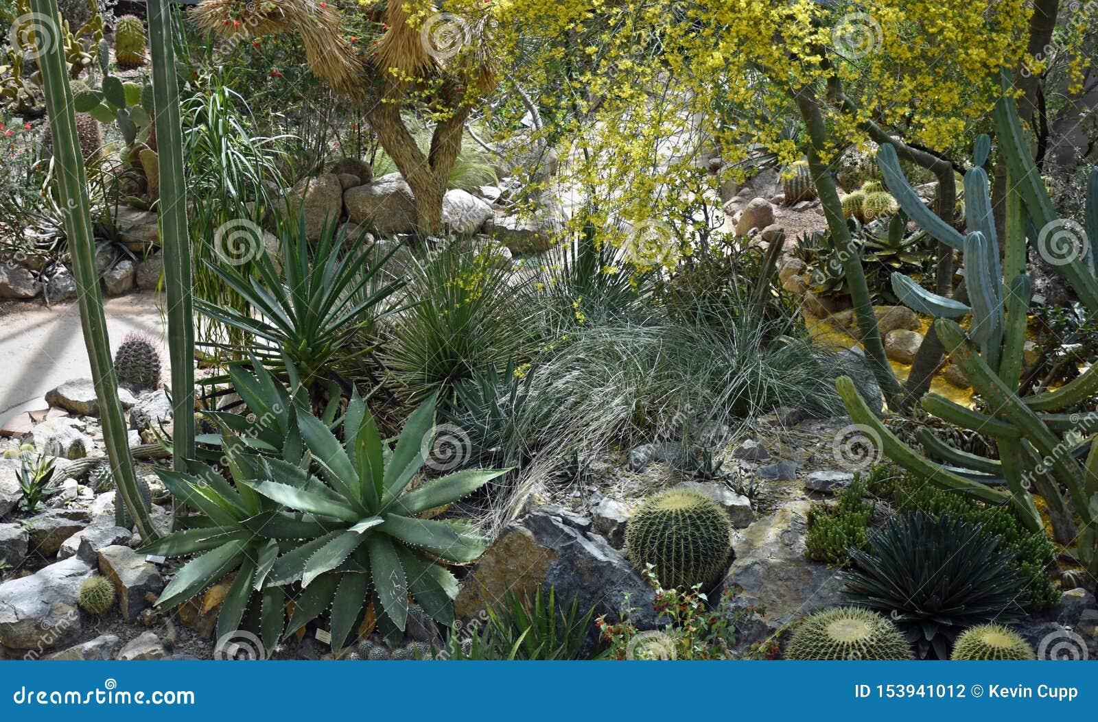 Сад и консерватория ландшафта пустыни