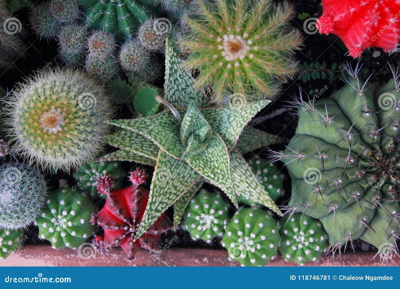 Сад кактуса взгляд сверху, разбивочный фокус